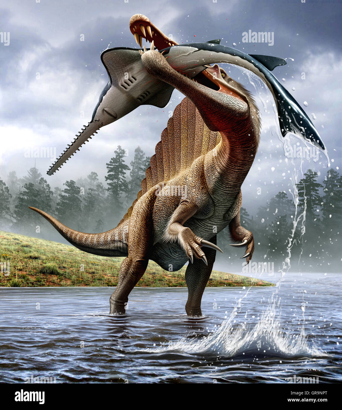 Spinosaurus hunts an Onchopristis - Stock Image