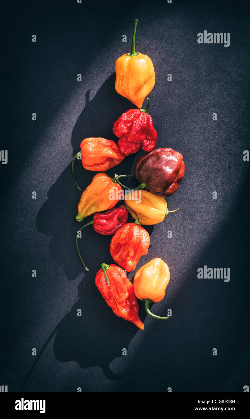 Hot Chillies on a dark background - Stock Image