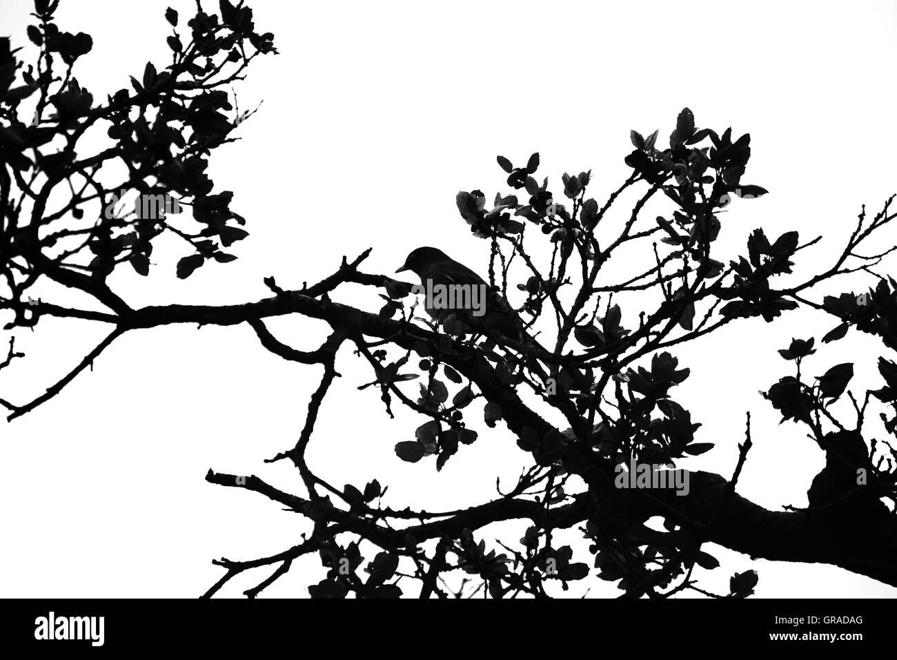 Bird Sitting In Tree Silhouette - Stock Image