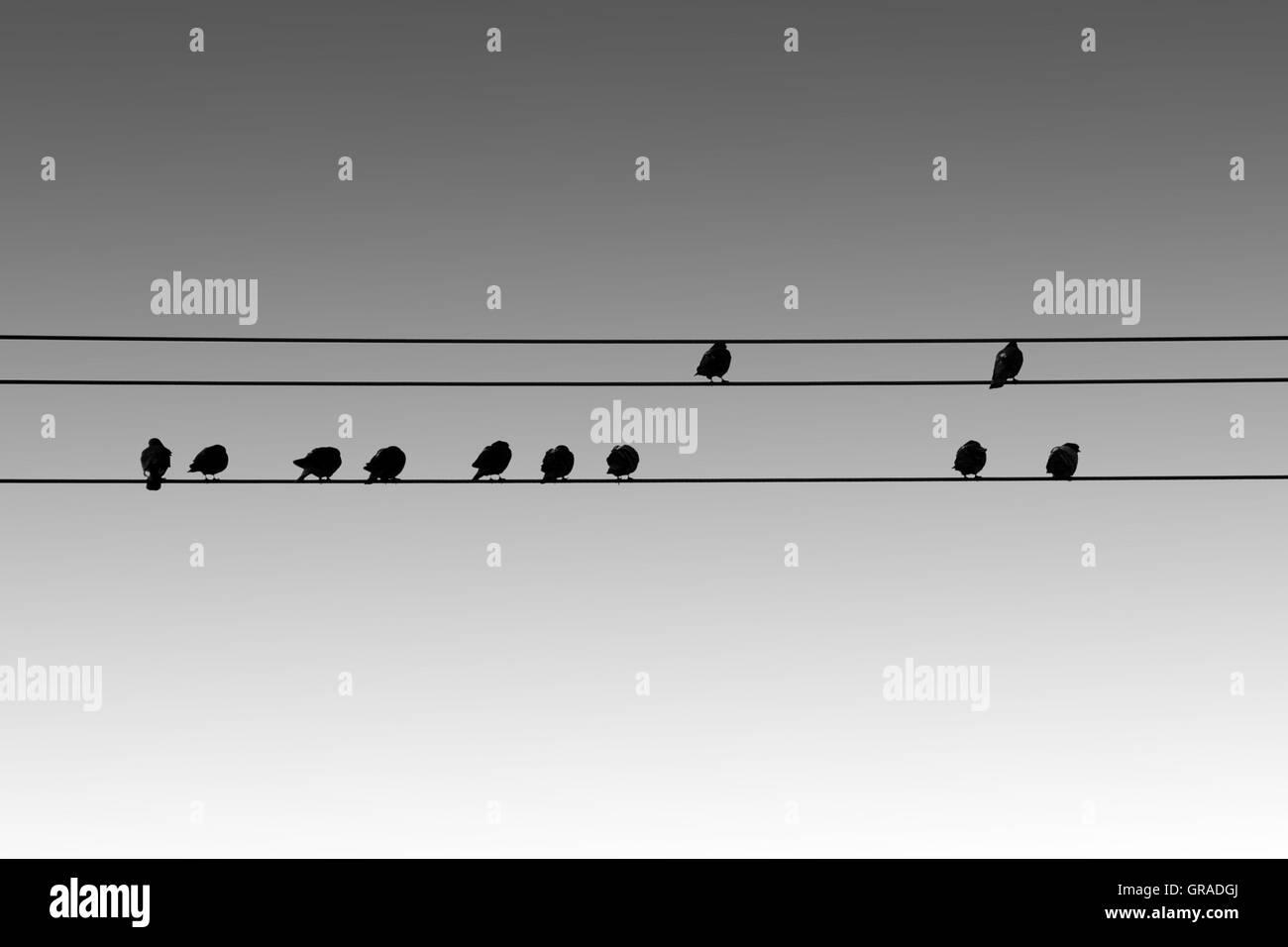 Bird Silhouettes - Stock Image