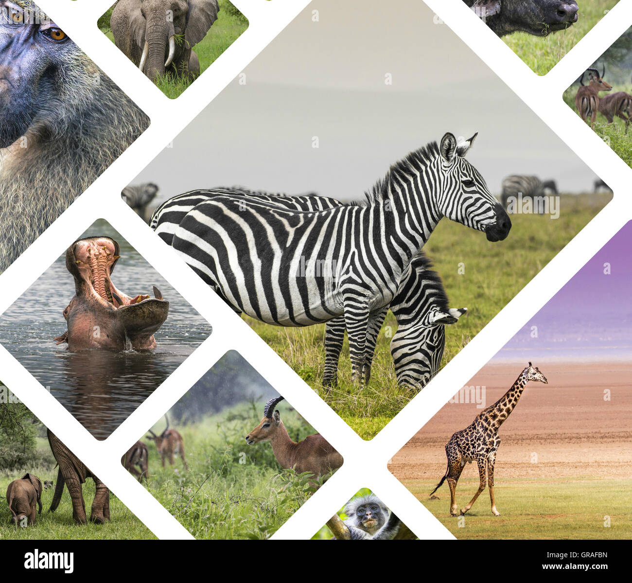 Collage Of Animals From Tanzania