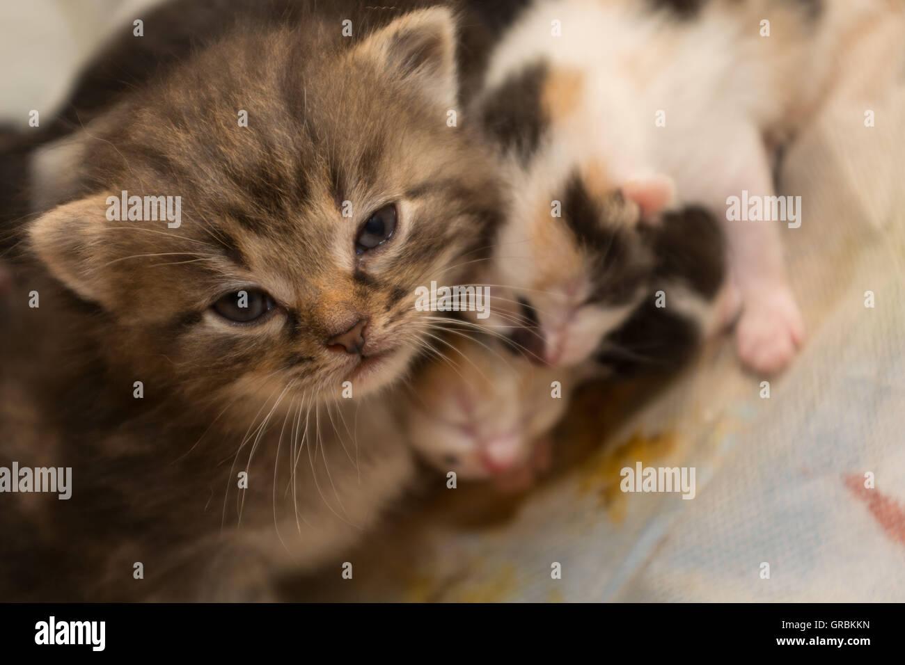 Several Kittens Seek Help - Stock Image