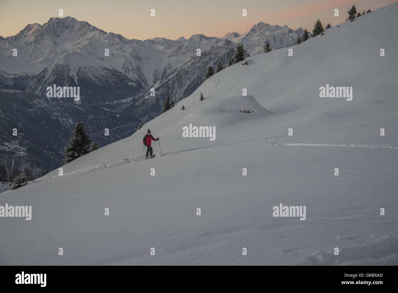 Female Snowshoer At Dawn, Moving Uphill On A Snowfield, In The Background Snowy Mountains - Stock Image