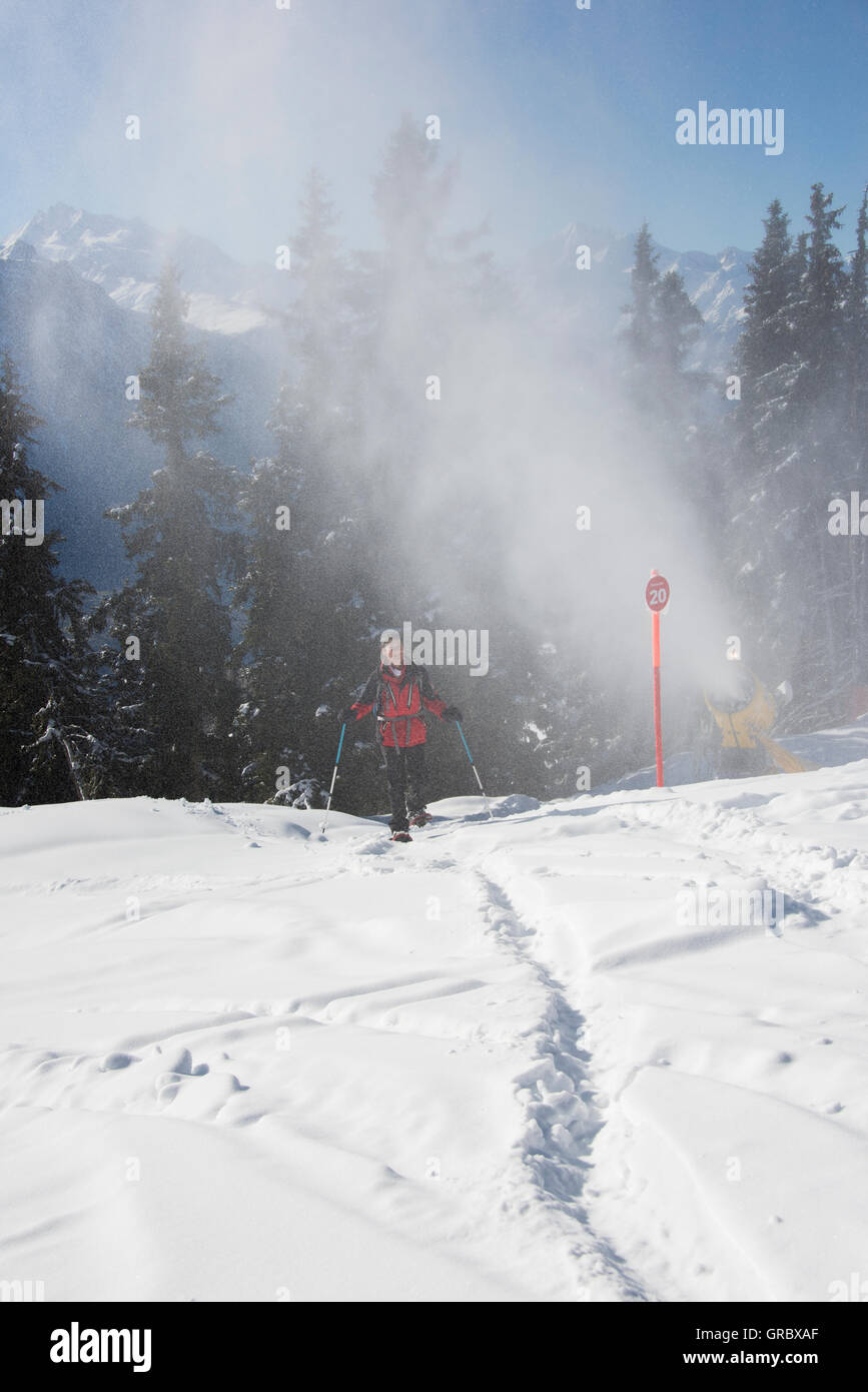 Snowshoer On Snowfiled, In The Background Active Snow Cannon, Fir Trees And Blue Sky - Stock Image