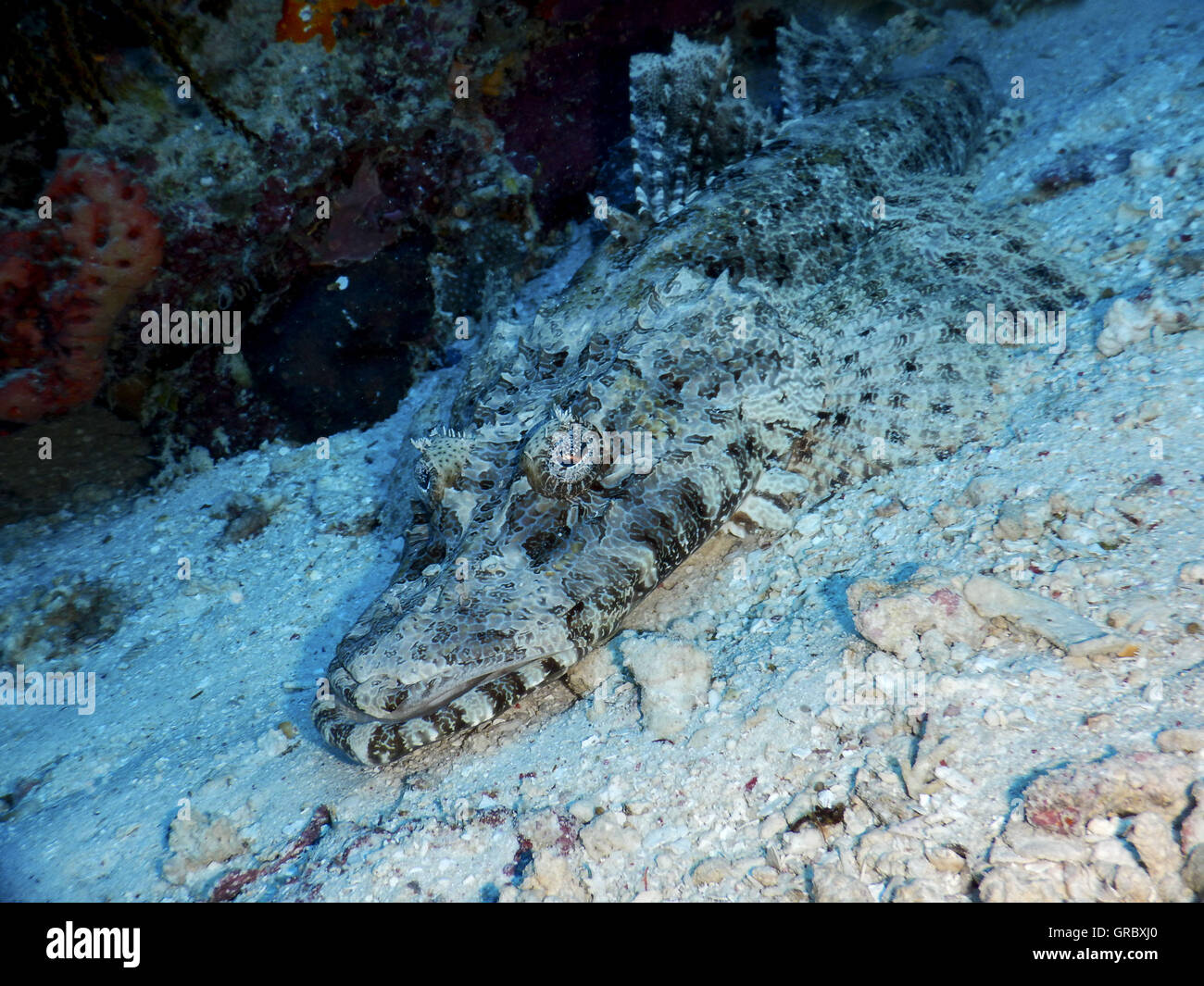Flathead On Sand. Selayar, South Sulawesi, Indonesia - Stock Image