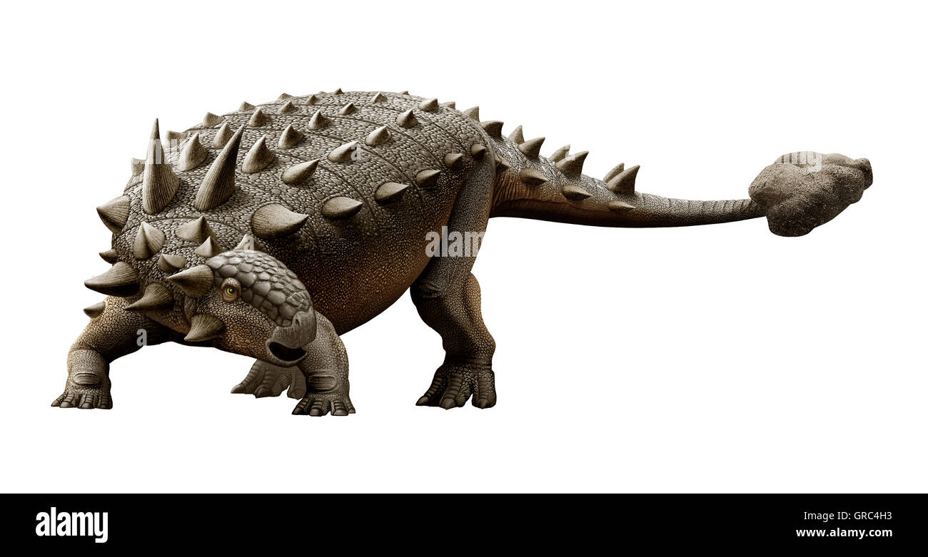 Euoplocephalus is one of the largest herbivorous ankylosaurian dinosaurs that lived in the Cretaceous Period - Stock Image