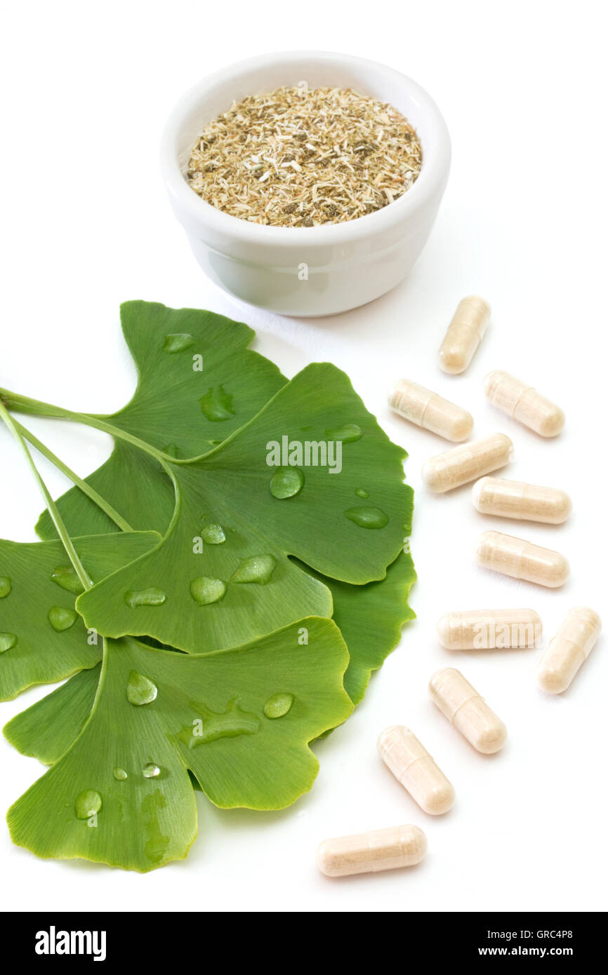 Fresh Ginkgo Leaves With Capsules And Dried Herb On White Background Stock Photo