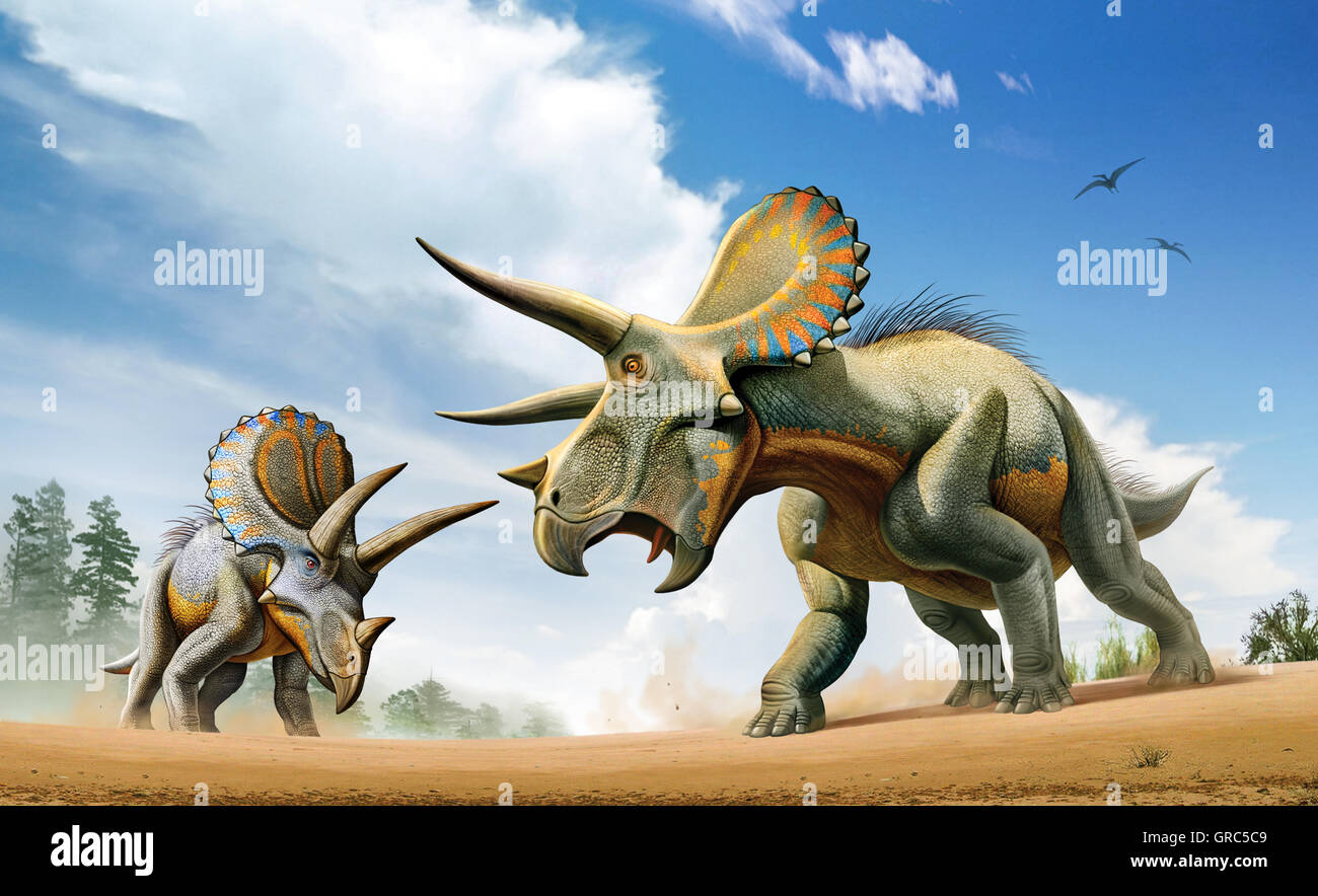 two triceratops dinosaurs fighting stock photo 117666985 alamy