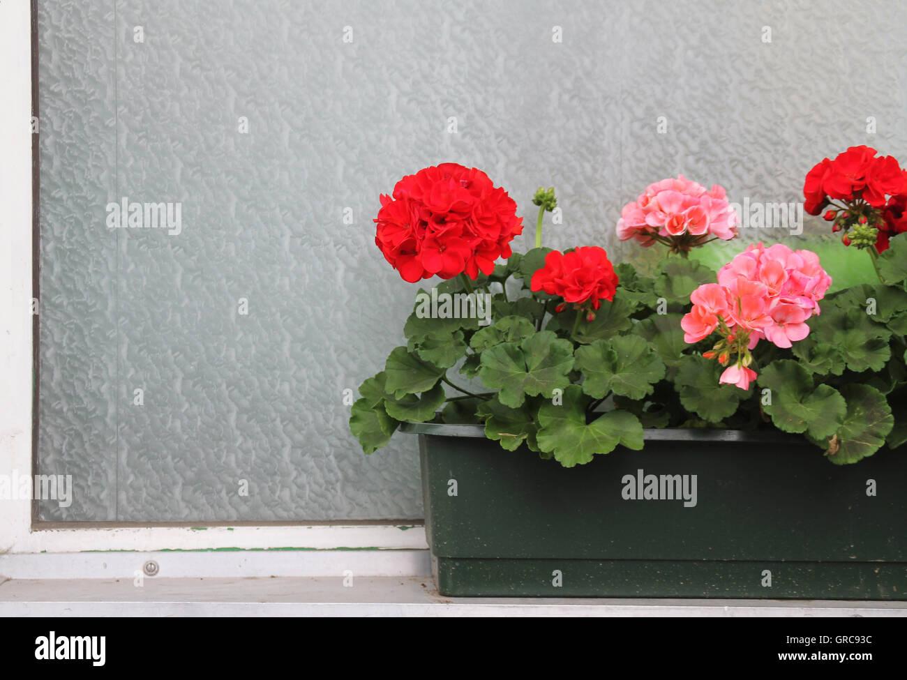 Flower Window Box - Stock Image
