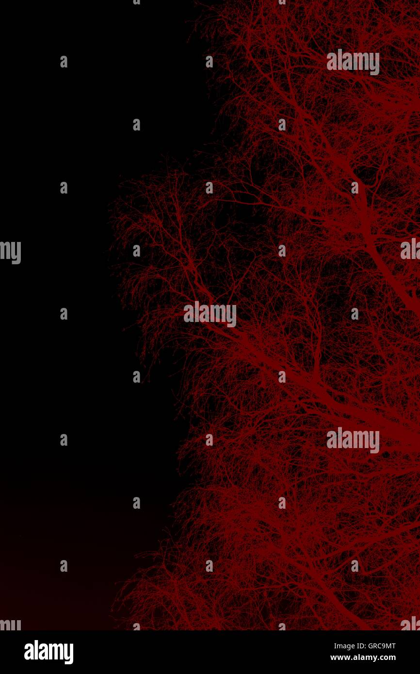 Mystical Branches - Stock Image