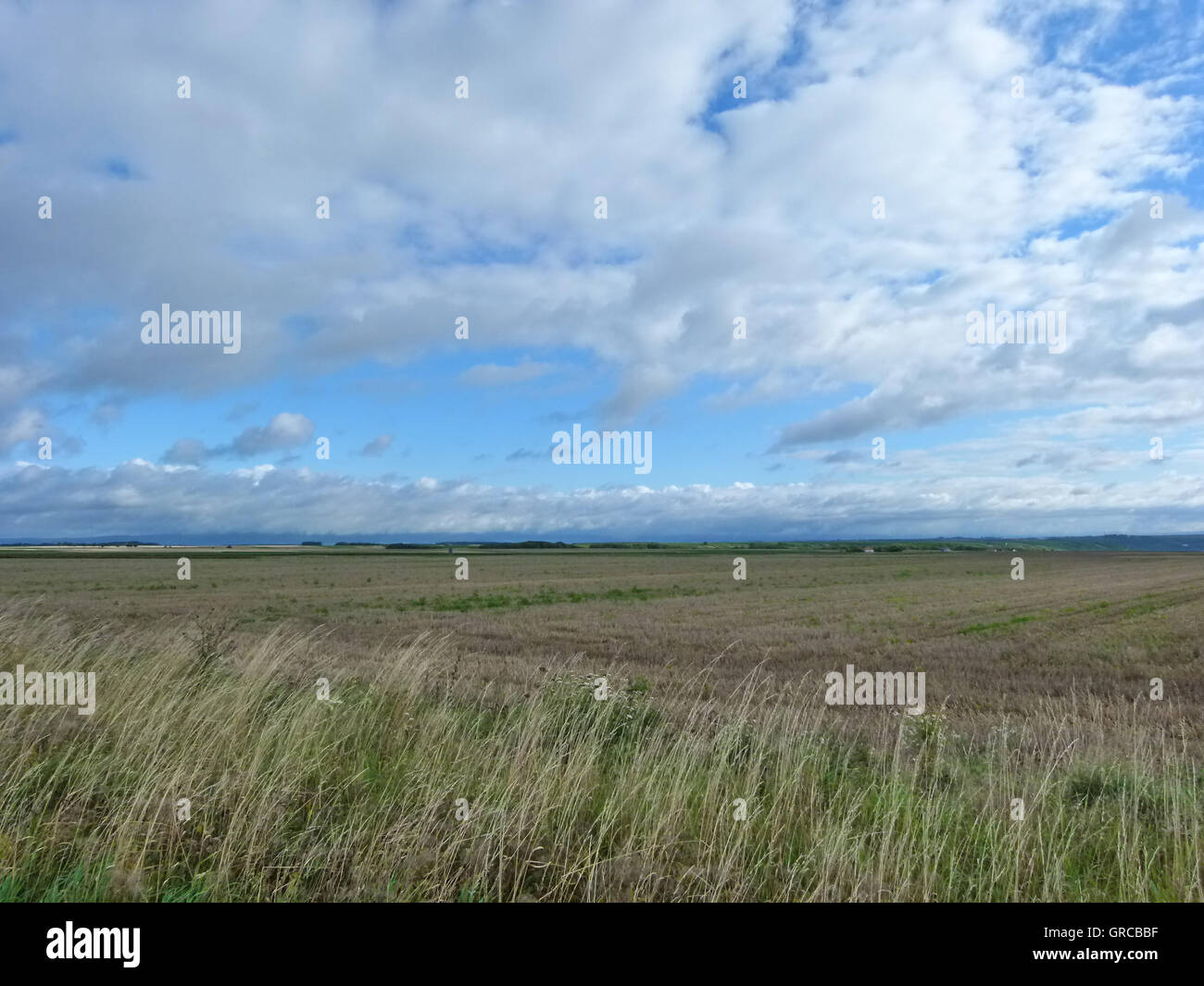 Summery Agricultural Landscape Under Blue Sky With Some White Clouds - Stock Image