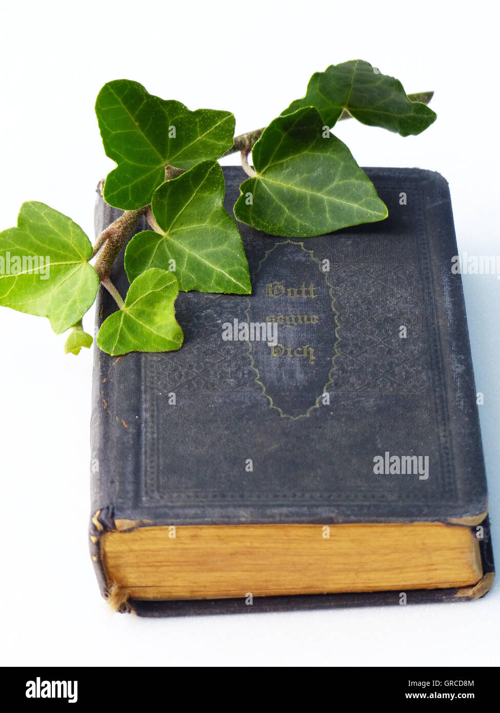 The Bible With An Ivy Twig - Stock Image