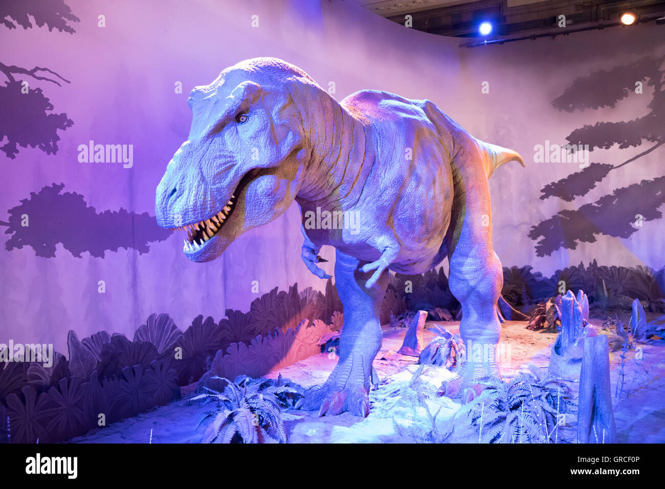 T. Rex at the Dinosaurs exhibit at the Natural History Museum, London, England. - Stock Image