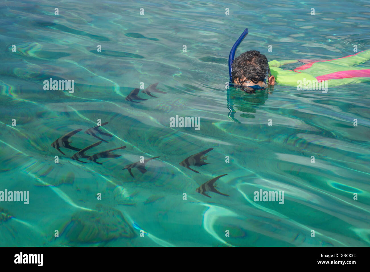 Female Snorkeler In Colorful Divesuit Observing Batfishes In The Shallow Waters Of The Banda Sea - Stock Image