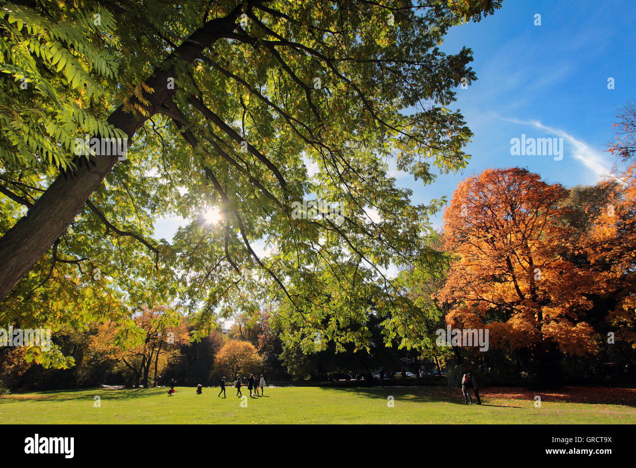 Fall Foliage At Park Englischer Garten In Munich - Stock Image