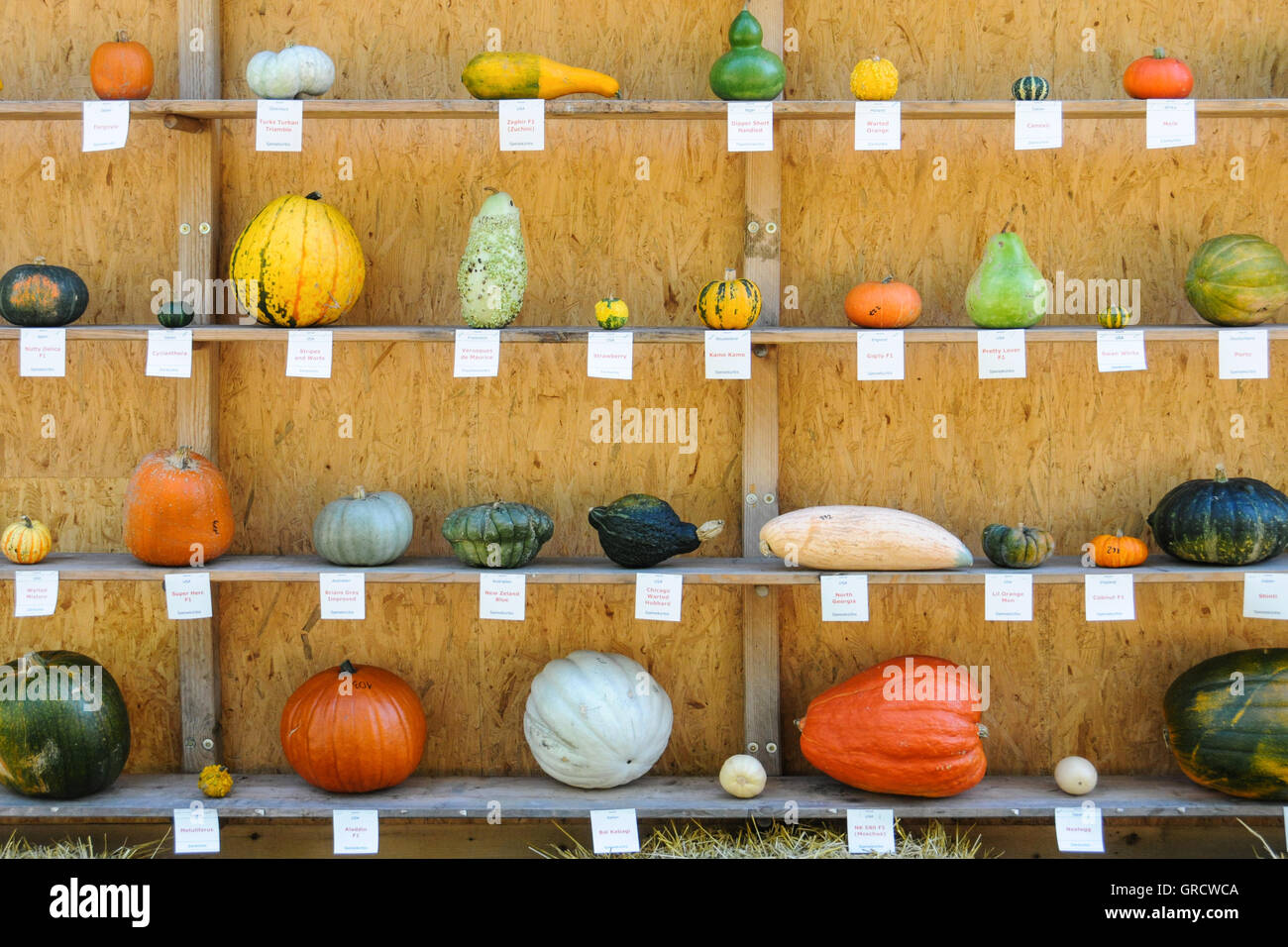 Several Different Colored Pumpkins Are Shown On A Wooden Shelf - Stock Image
