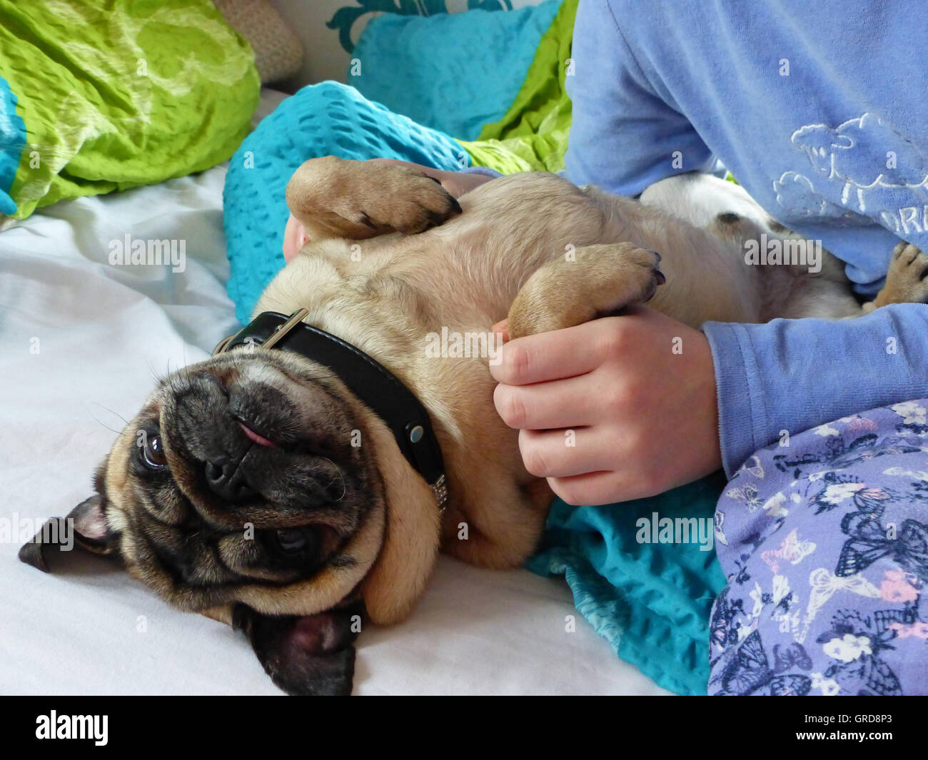Child Playing In Bed With The Family Dog - Stock Image