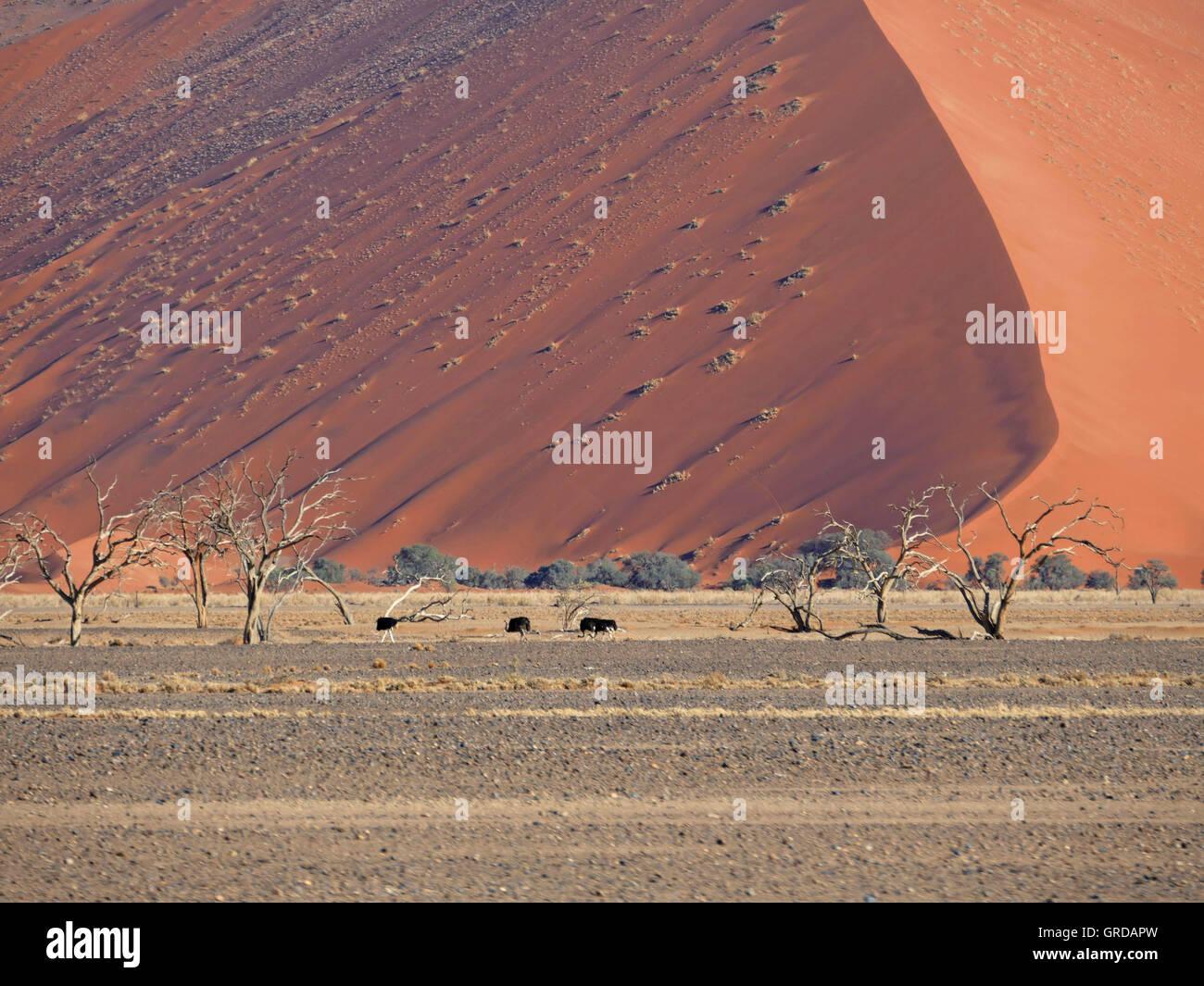 Sossusvlei, Namib Desert, Dune 45, Namibia Stock Photo