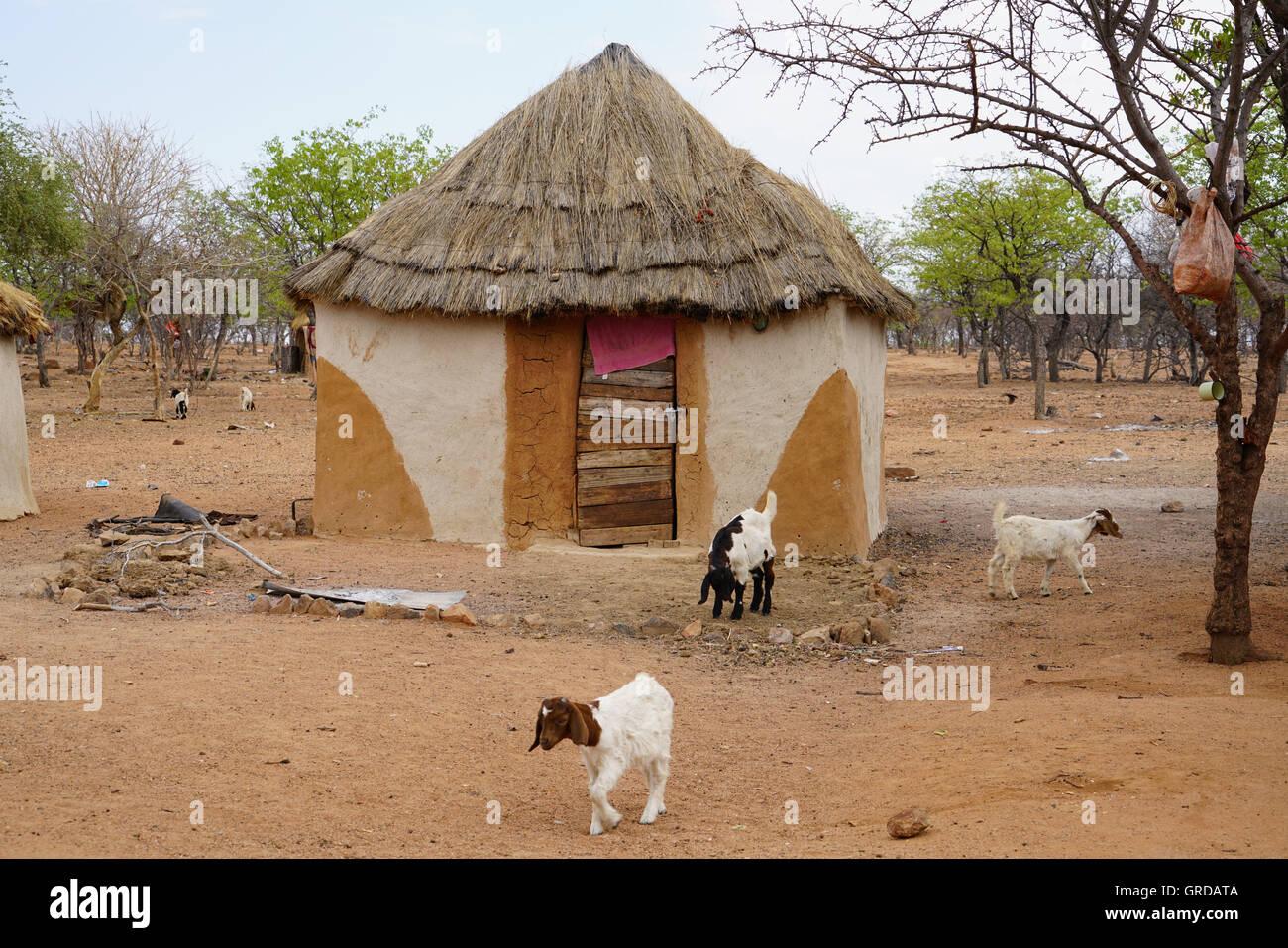 Himba Village - Stock Image