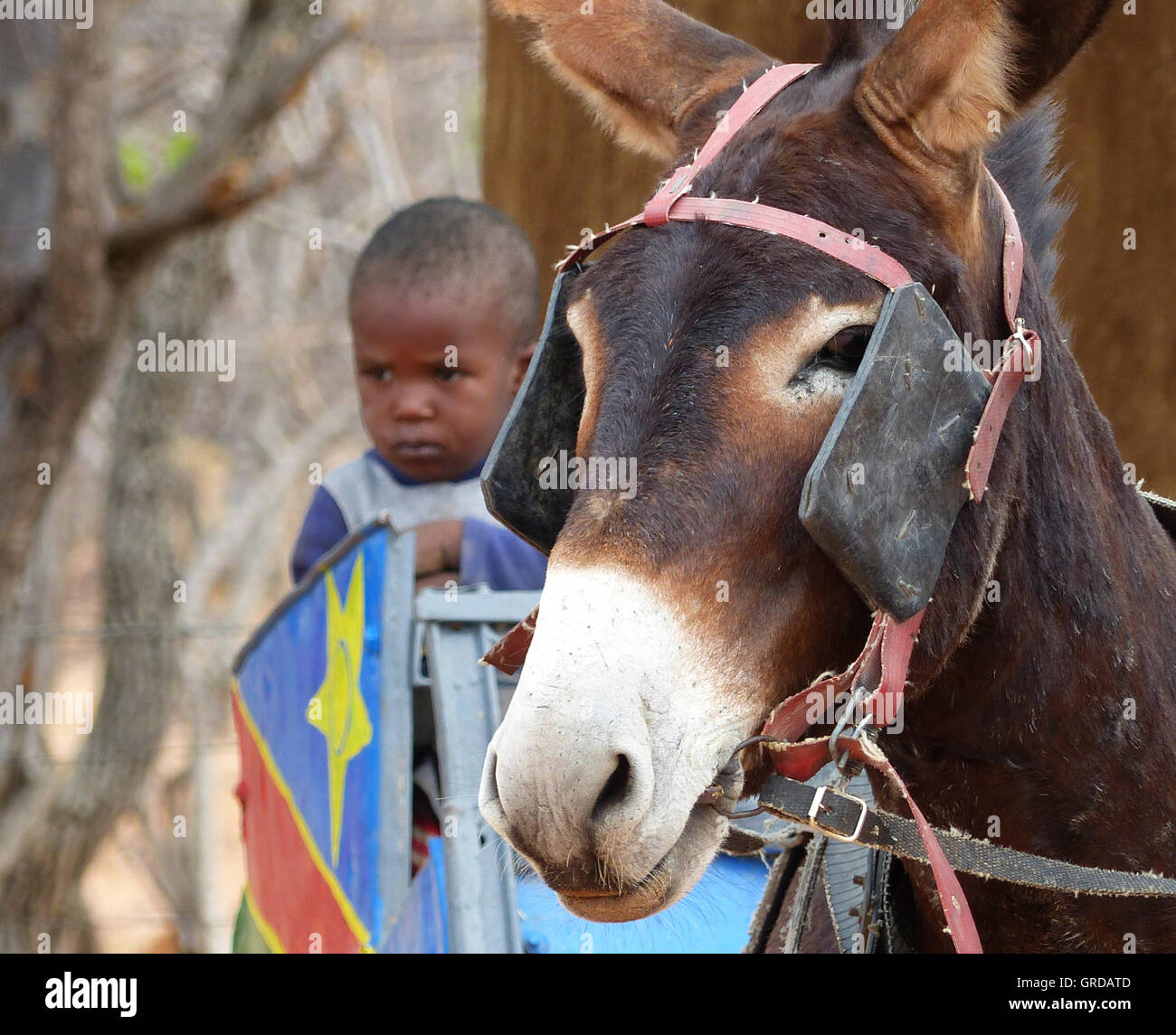 Donkey Wagon And Aside A Young Child, Colorfully Dressed, Himba, Namibia - Stock Image