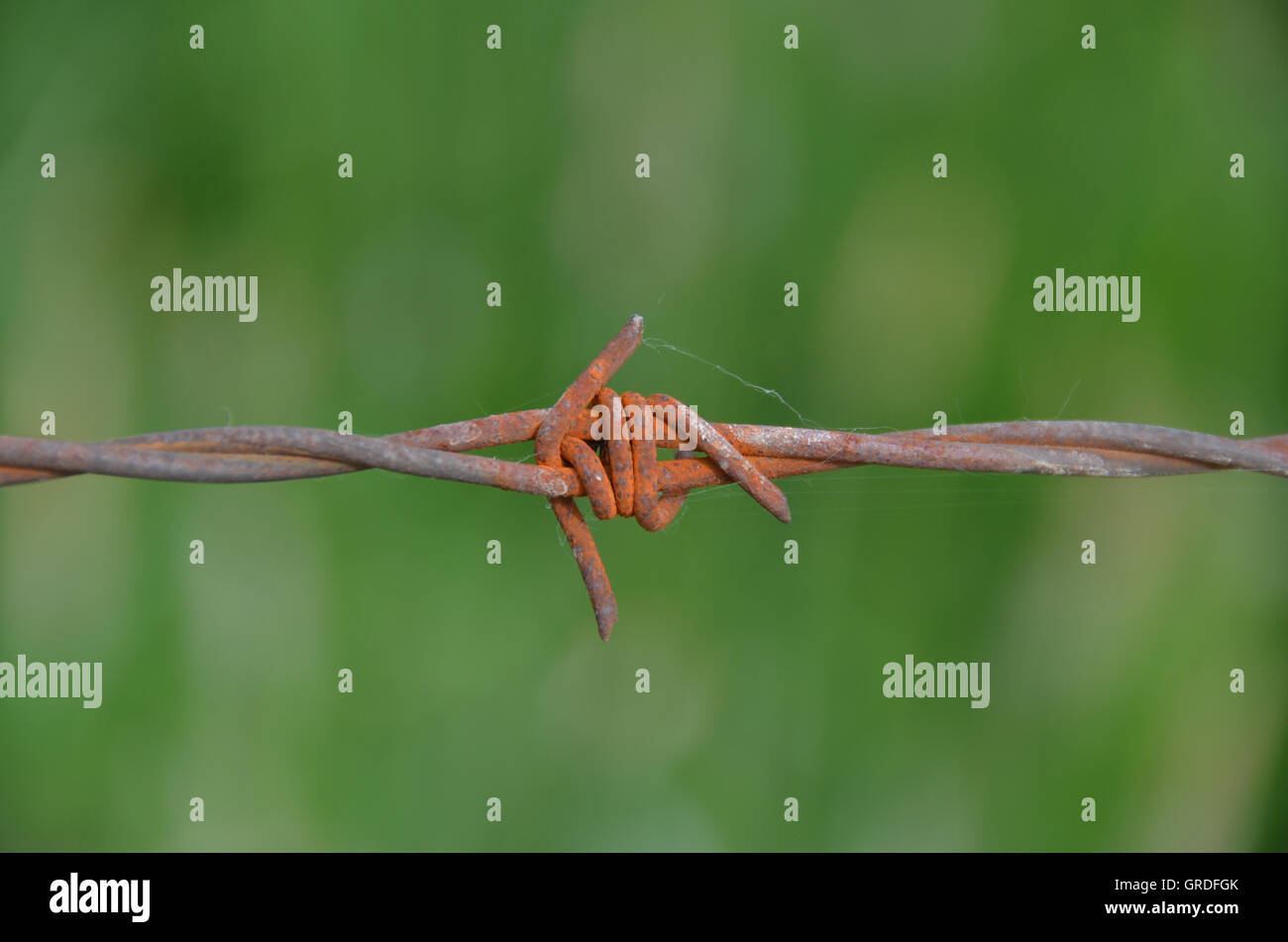 Barbed Wire Fence In Front Of Green Background - Stock Image