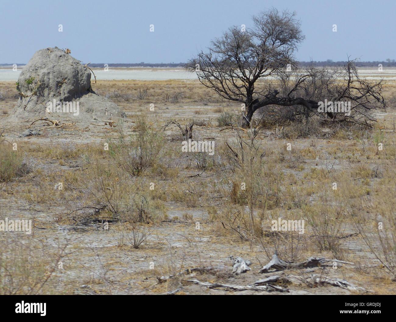 Termite Mound And Next To It A Leafless Tree, In Etosha Pan - Stock Image