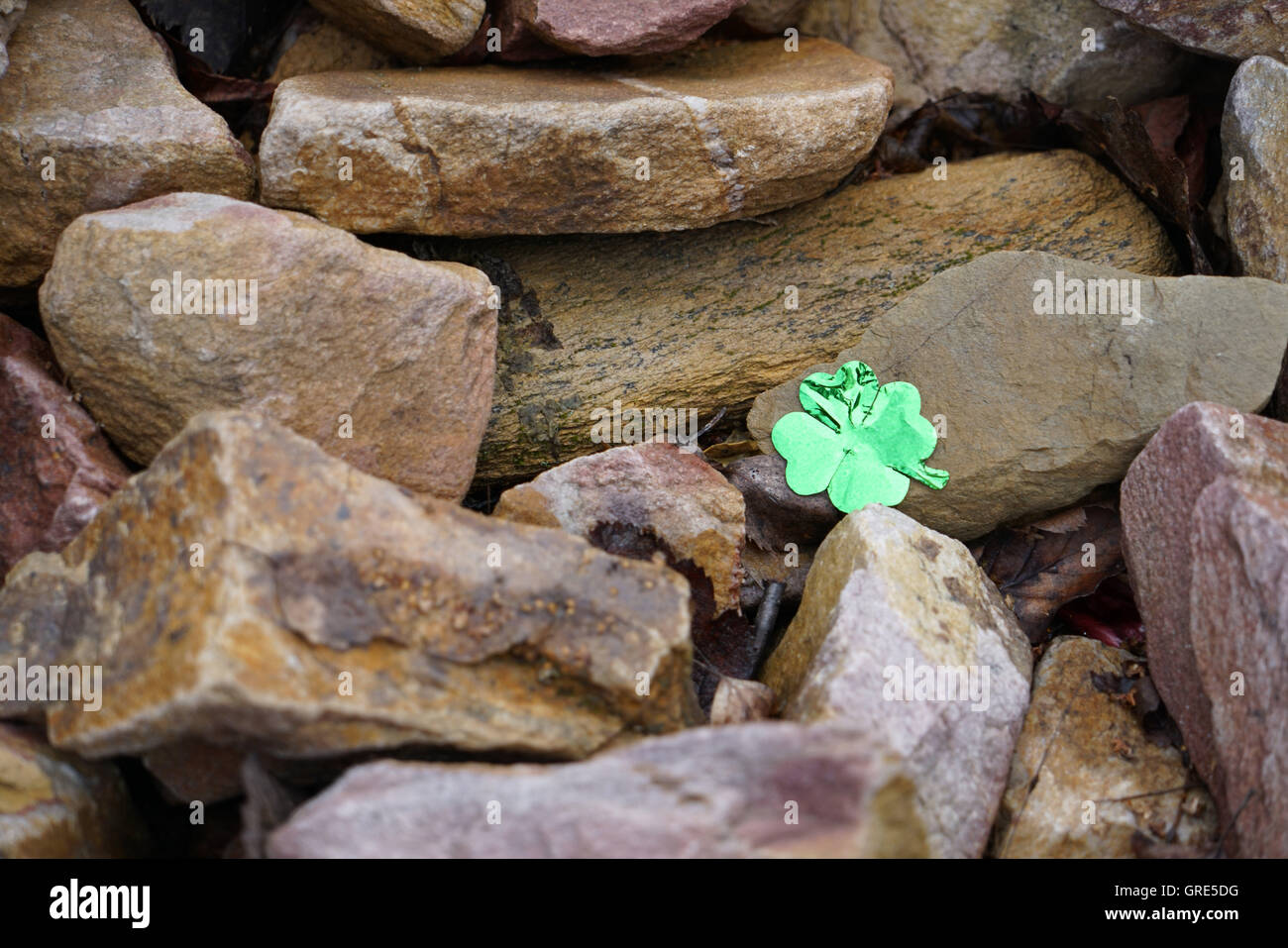 Glistening Four Leaf Clover On Stones - Stock Image