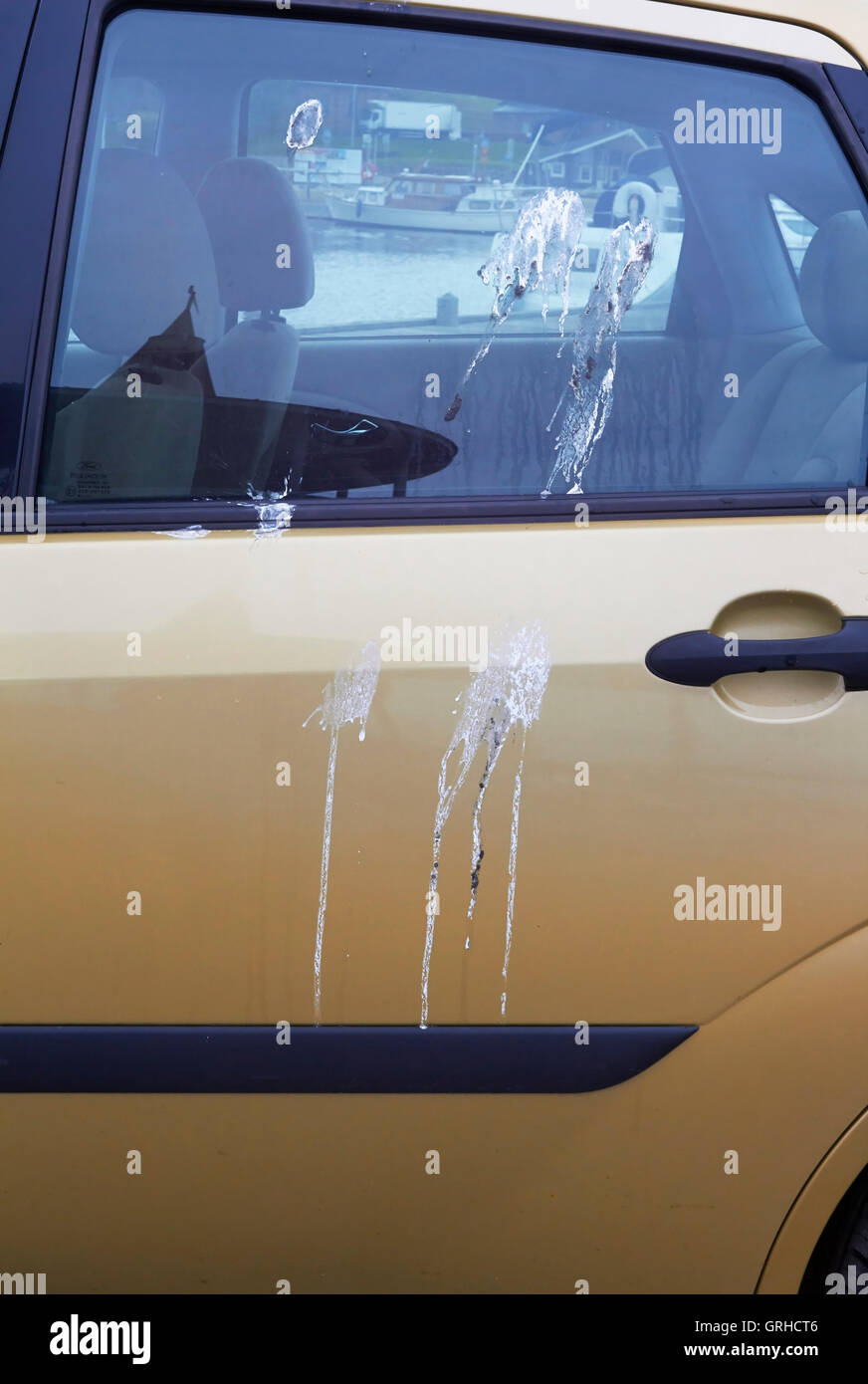 bird droppings on car - Stock Image