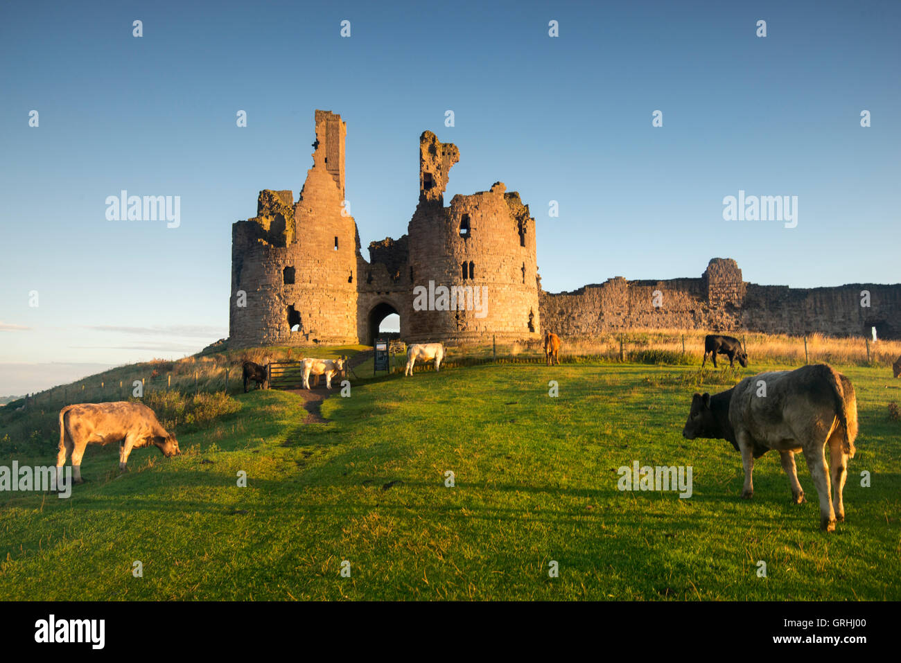 Early morning by the ruins of Dunstanburgh Castle on the coast of Northumberland, England UK - Stock Image