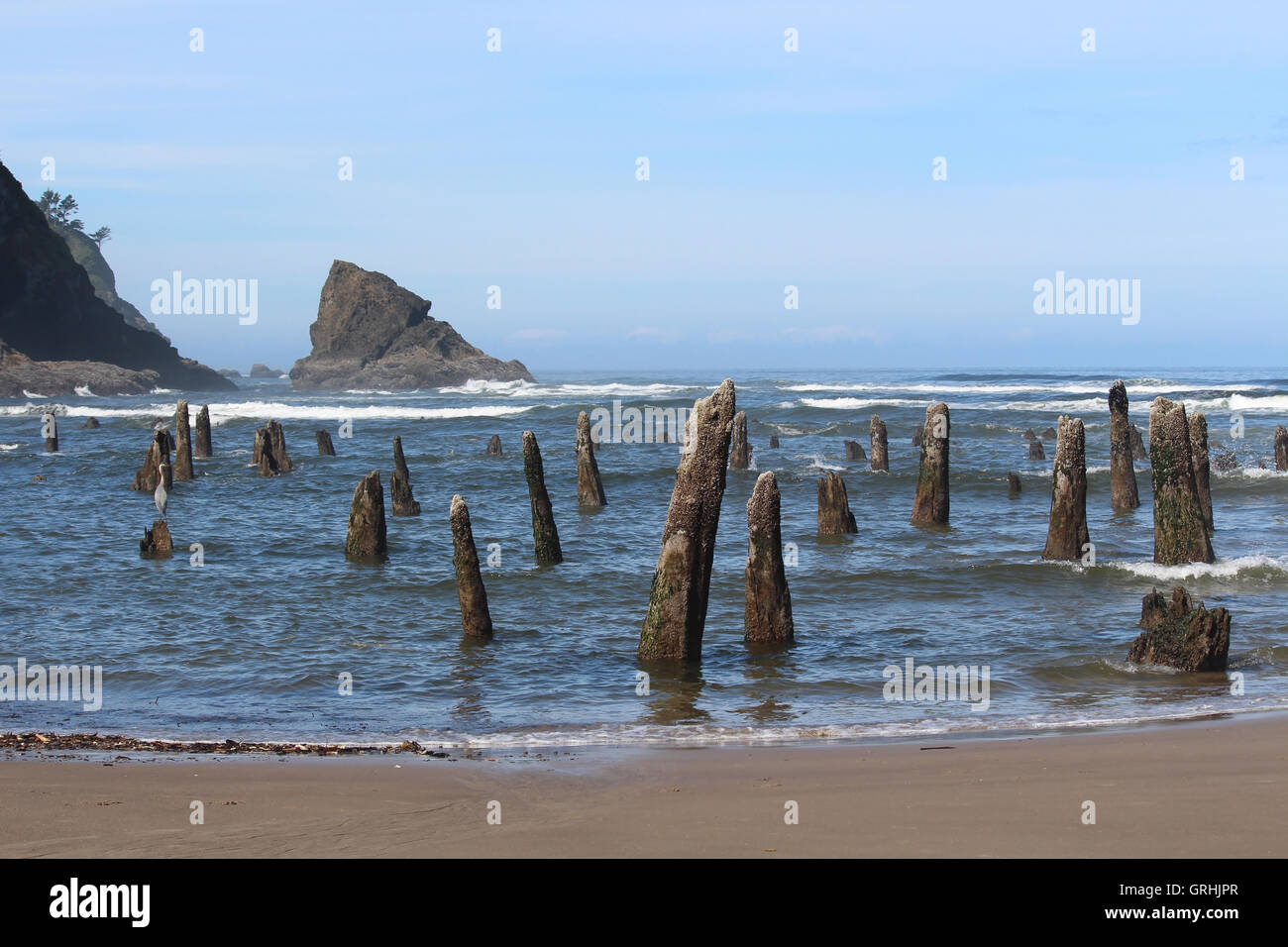 Stumps of mystery, Neskowin, OR - Stock Image