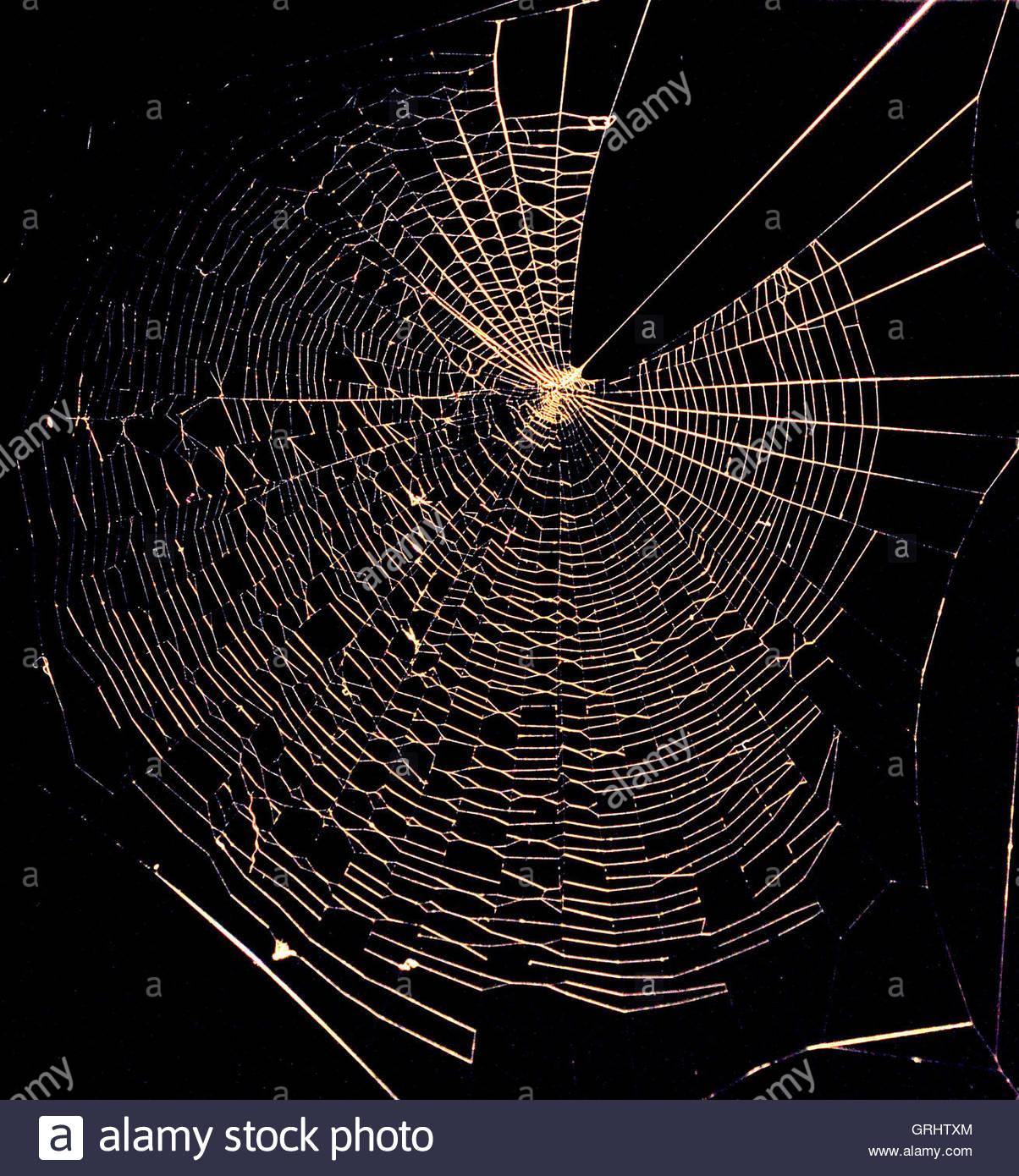A spider's web illuminated by a spotlight - Stock Image