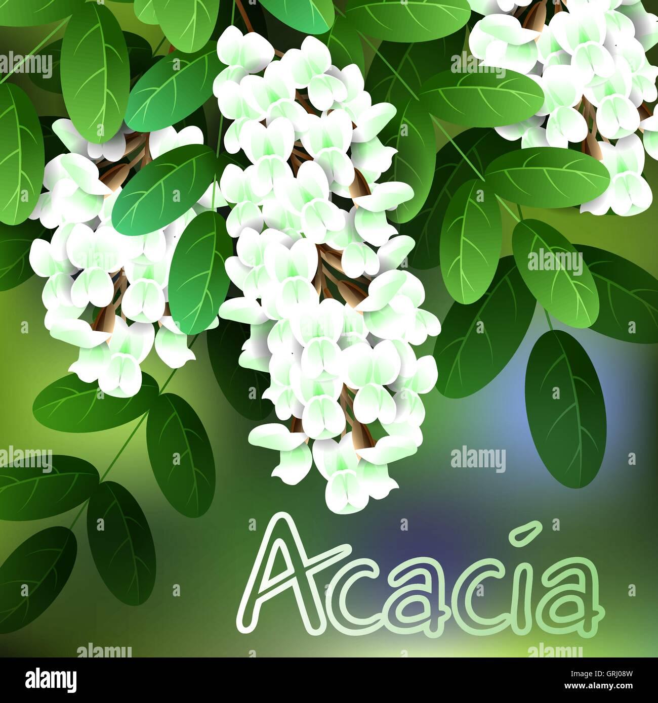 Green Acacia Tree Stock Vector Images Alamy