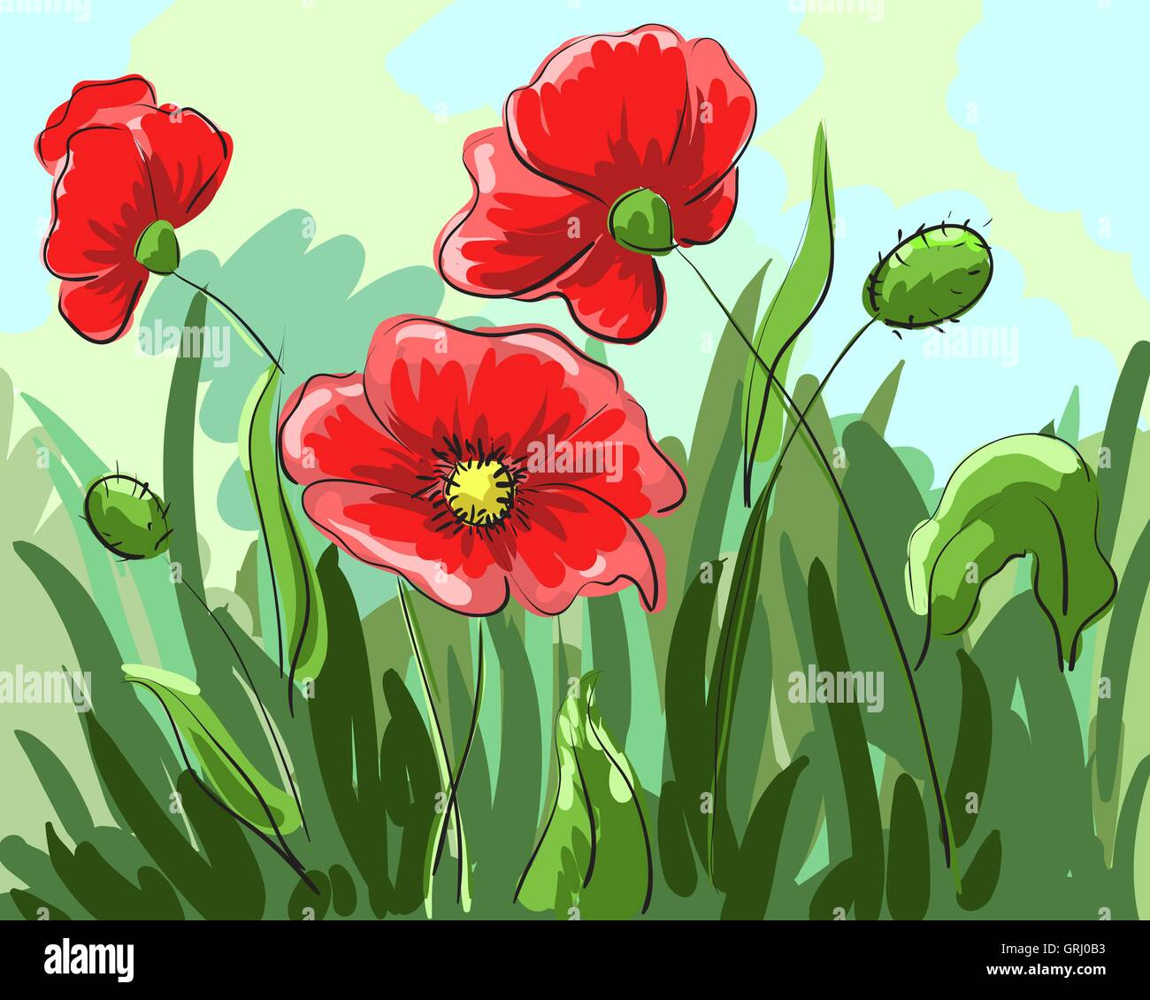red poppies painted by hand grow on the field with green leaves. Vector - Stock Vector
