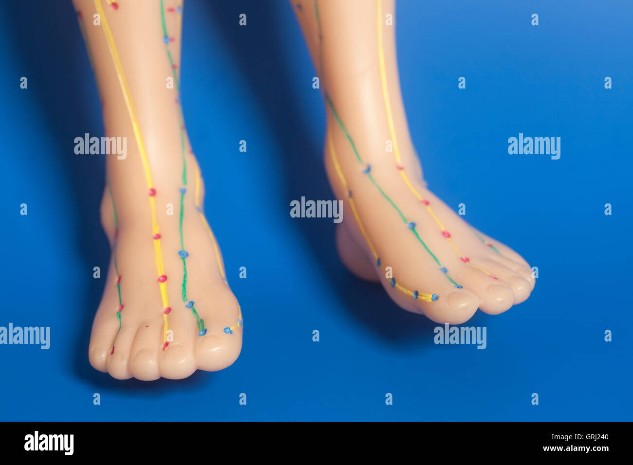 Medical acupuncture model of human feet  on blue background - Stock Image