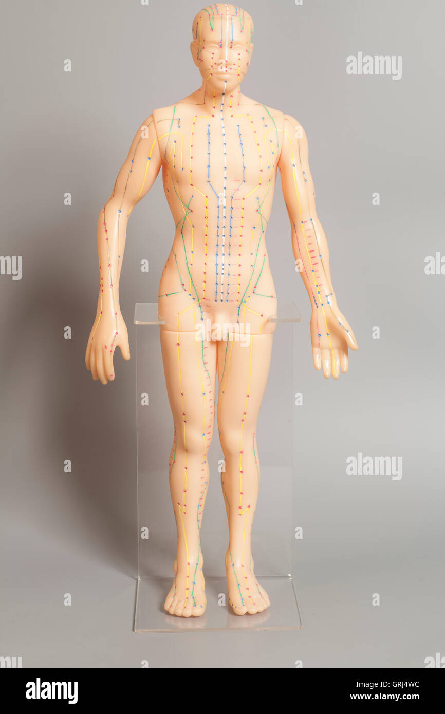 Medical acupuncture model of human on gray background - Stock Image