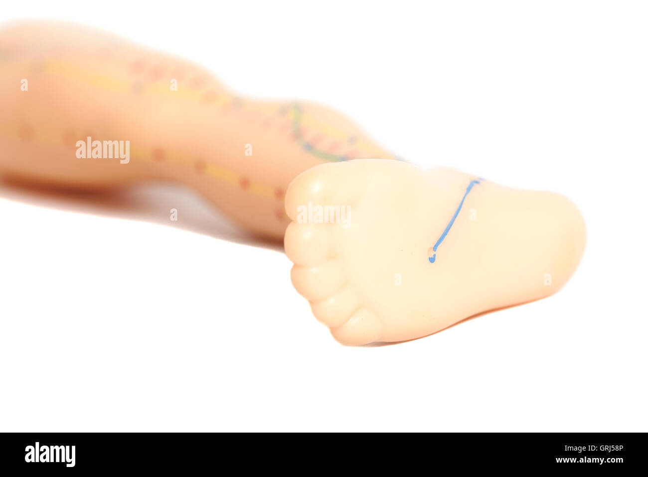 Medical acupuncture model of human feet isolated on white - Stock Image