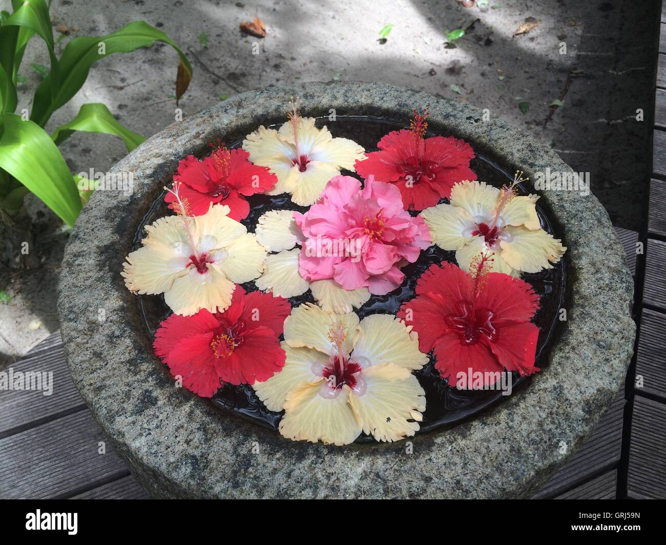Flower Arrangement Floating Outdoors In A Bowl Stock Photo