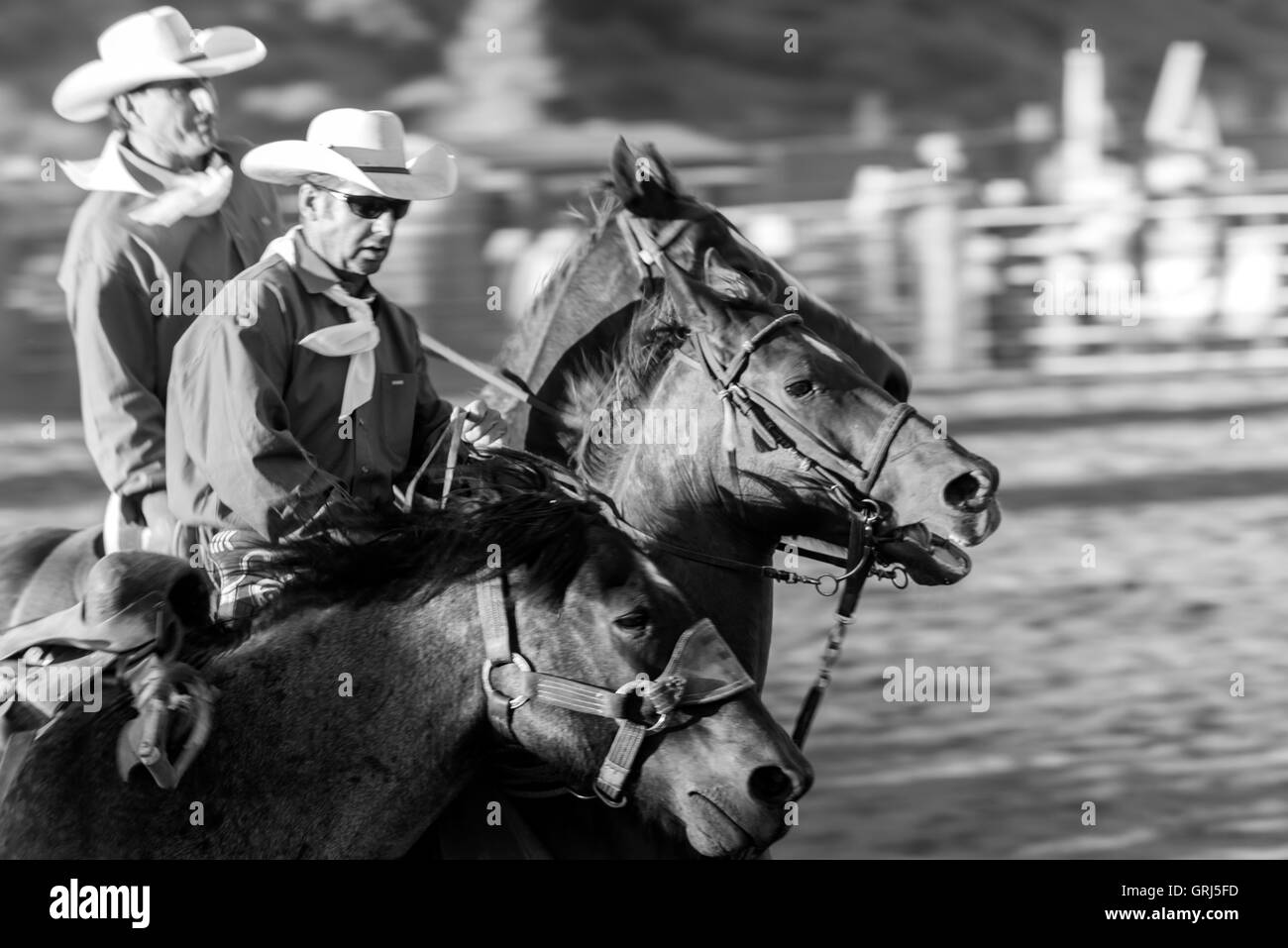 Action during the Saddle bronc riding competition at Snowmass Rodeo, Snowmass, Colorado - Stock Image