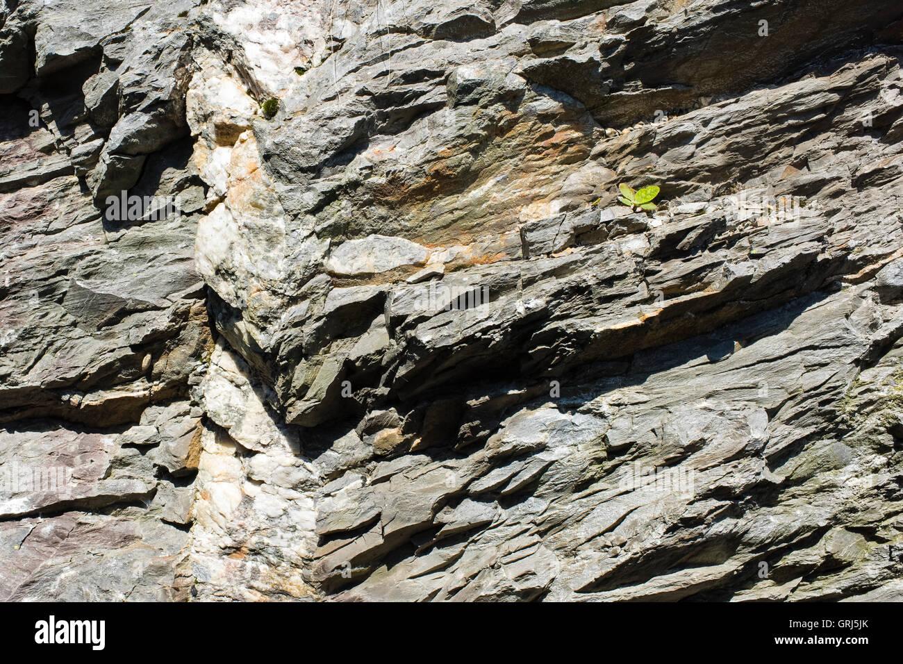 A vertical quartz intrusion in layered slate near Blaenau Ffestiniog, Gwynedd, Wales UK - Stock Image