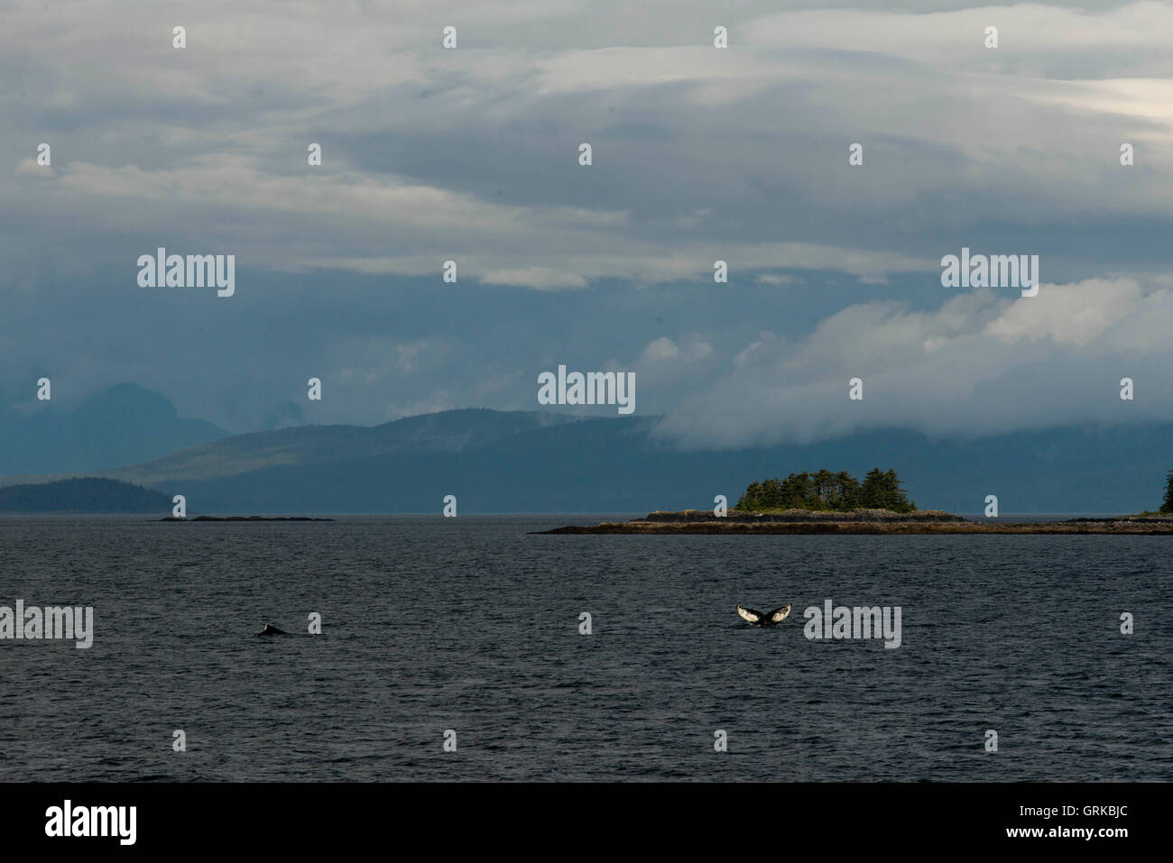 Humpback Whales blowing and diving and Five Fingers Lighthouse. Frederick Sound. Stephen's Passage. Petersberg. Stock Photo