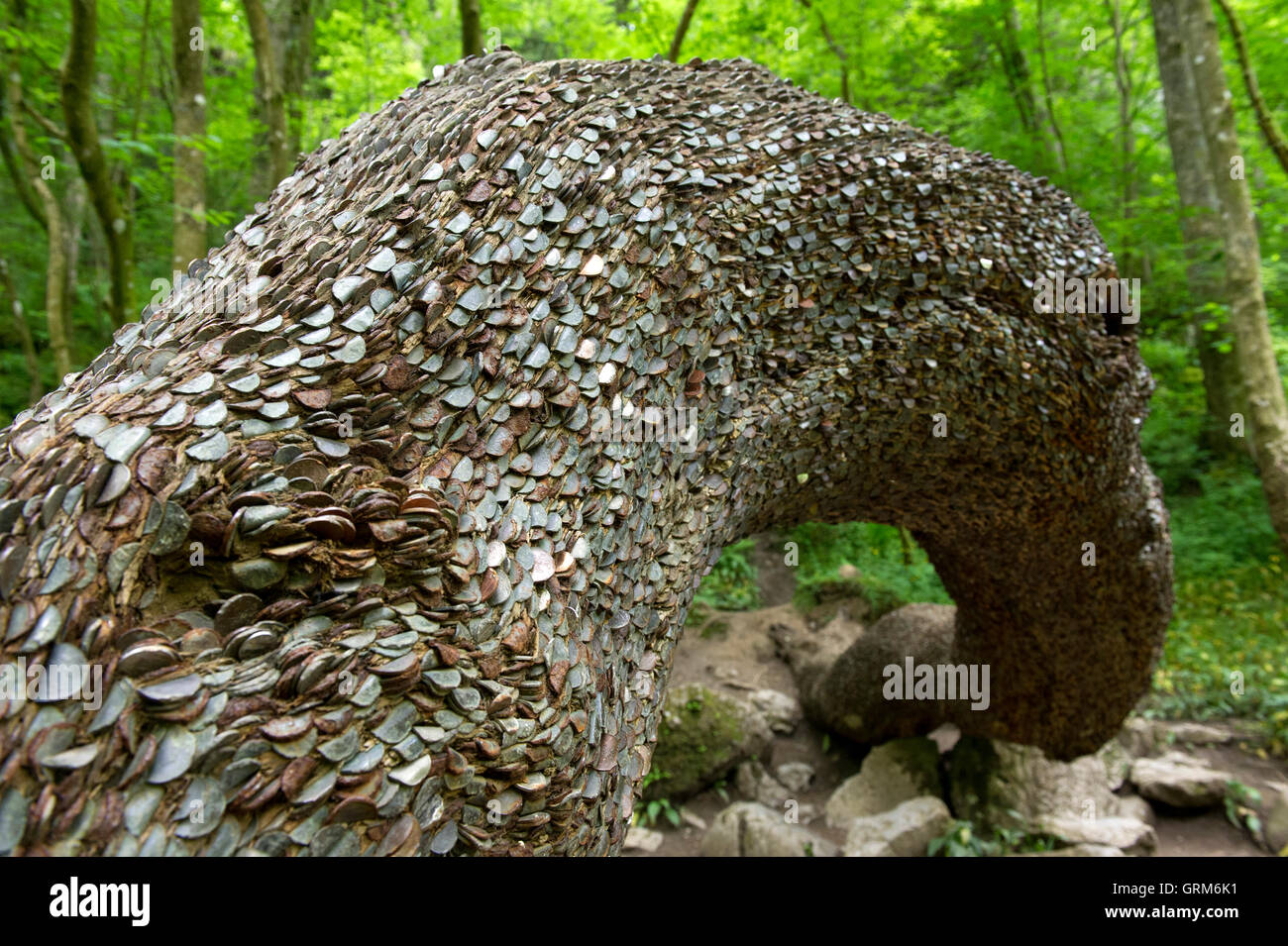 Coins embedded into the Wishing Tree along the Ingleton Waterfall Trail in the Yorkshire Dales - Stock Image
