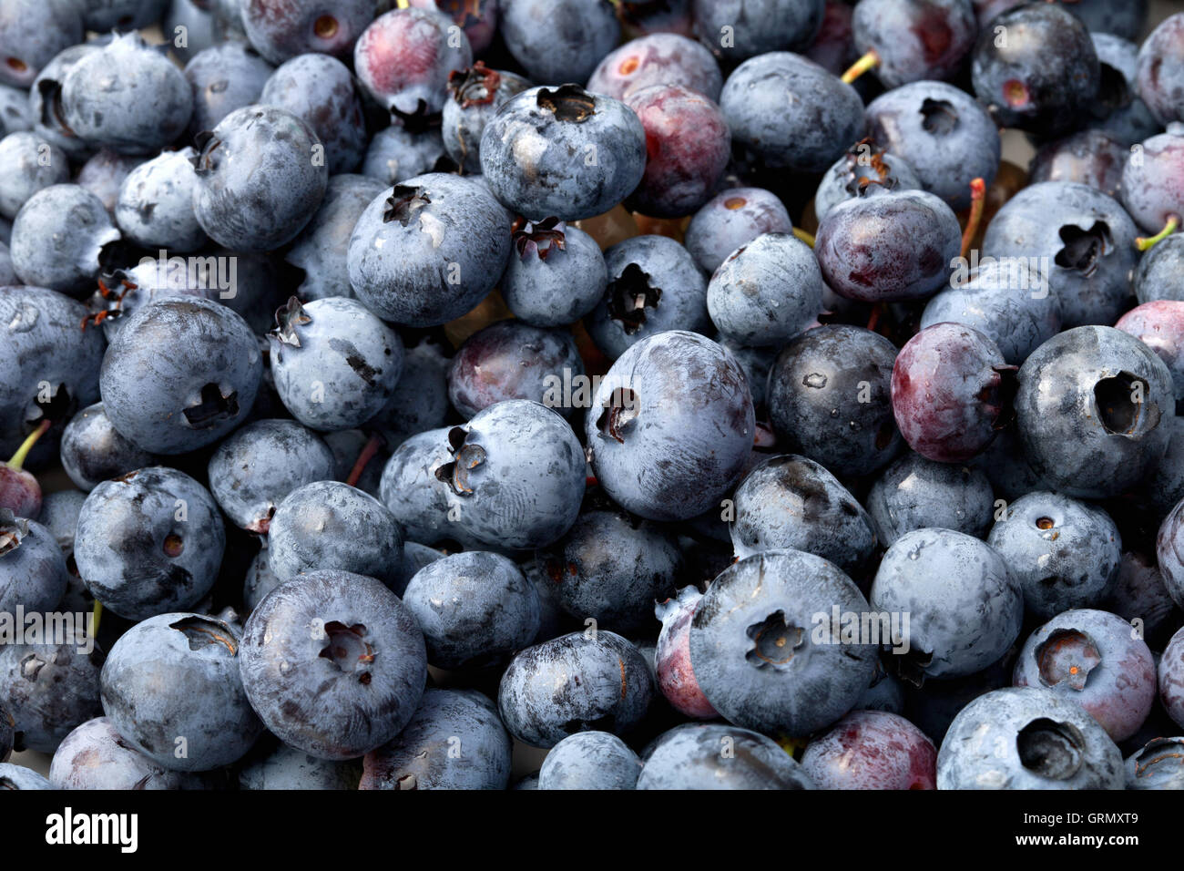 Closeup image of delicious blueberries background texture. - Stock Image