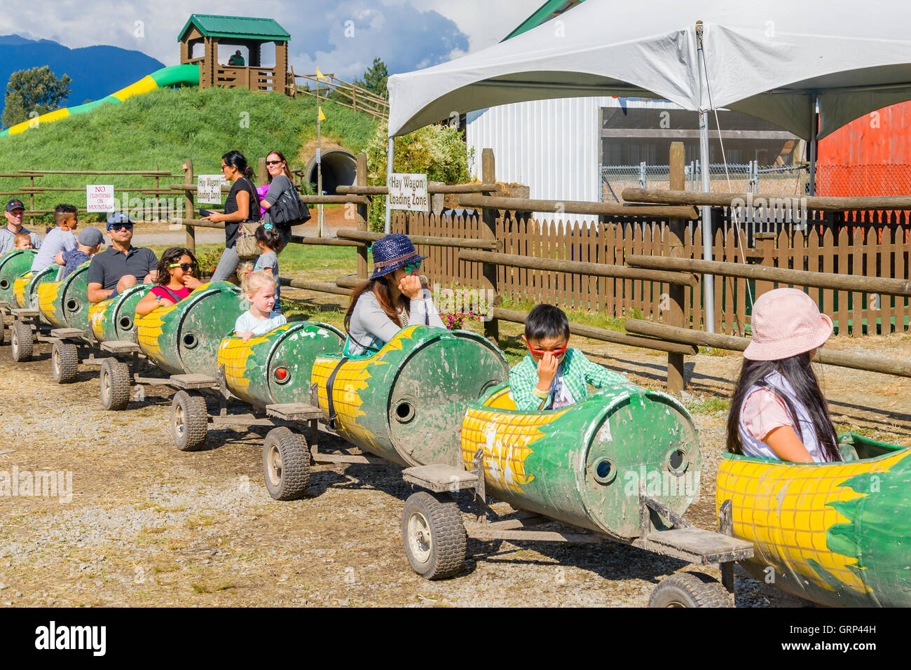 Hopcott's Meadows Corn Maze train, Pitt Meadows, British Columbia, Canada - Stock Image