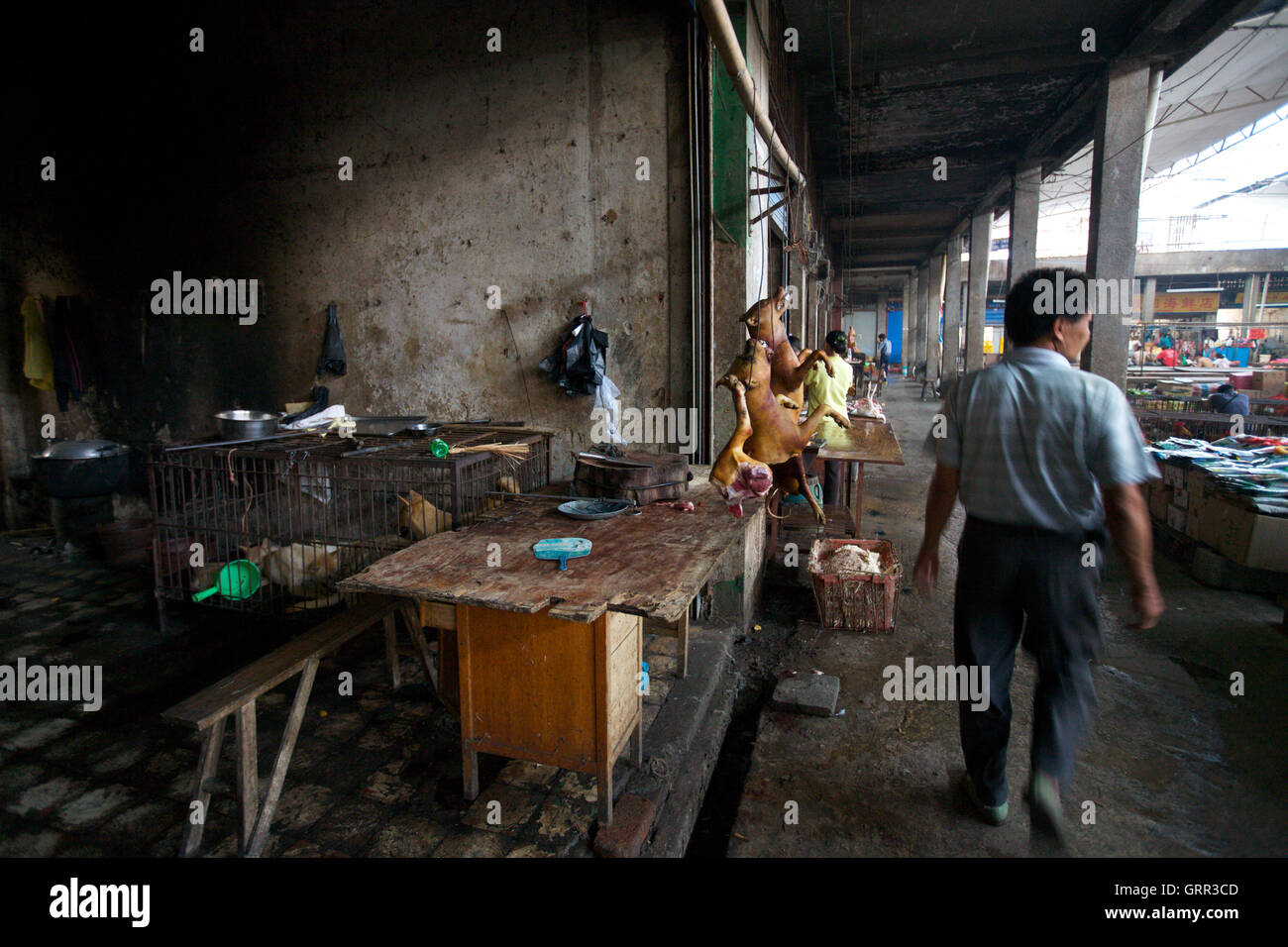 Dog meat hangs on sale in a market in Yangshou, China, while live dogs await their fate in a cage behind. The dogs - Stock Image