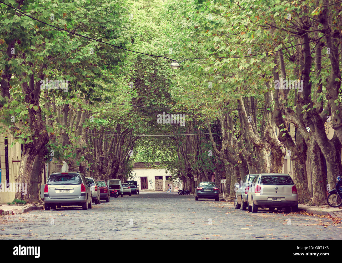 COLONIA DEL SACRAMENTO, URUGUAY - MAY 04, 2016: nice street with some big trees on the sidewalks and some parks - Stock Image