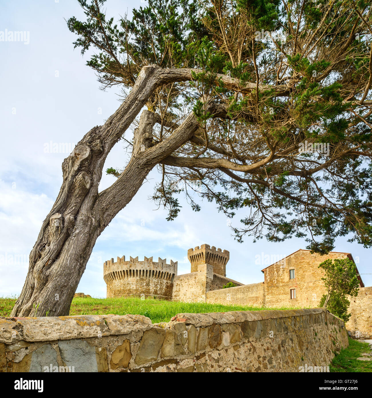 Pine tree in Populonia medieval village landmark, city walls and fort tower on background. Tuscany, Italy. - Stock Image