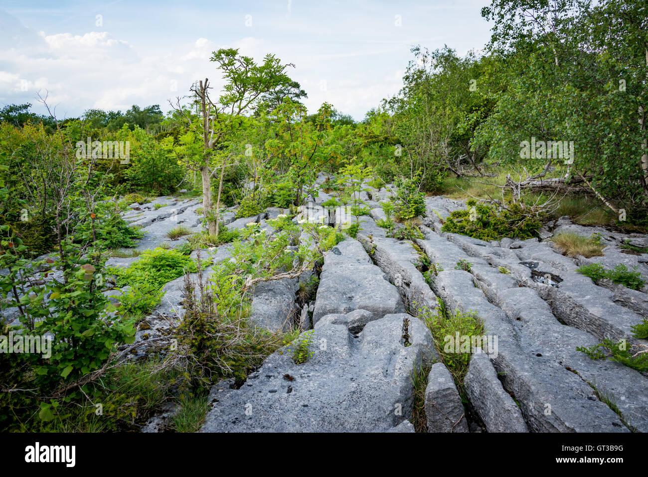Limestone pavement at Arnside AONB, Cumbria - Stock Image