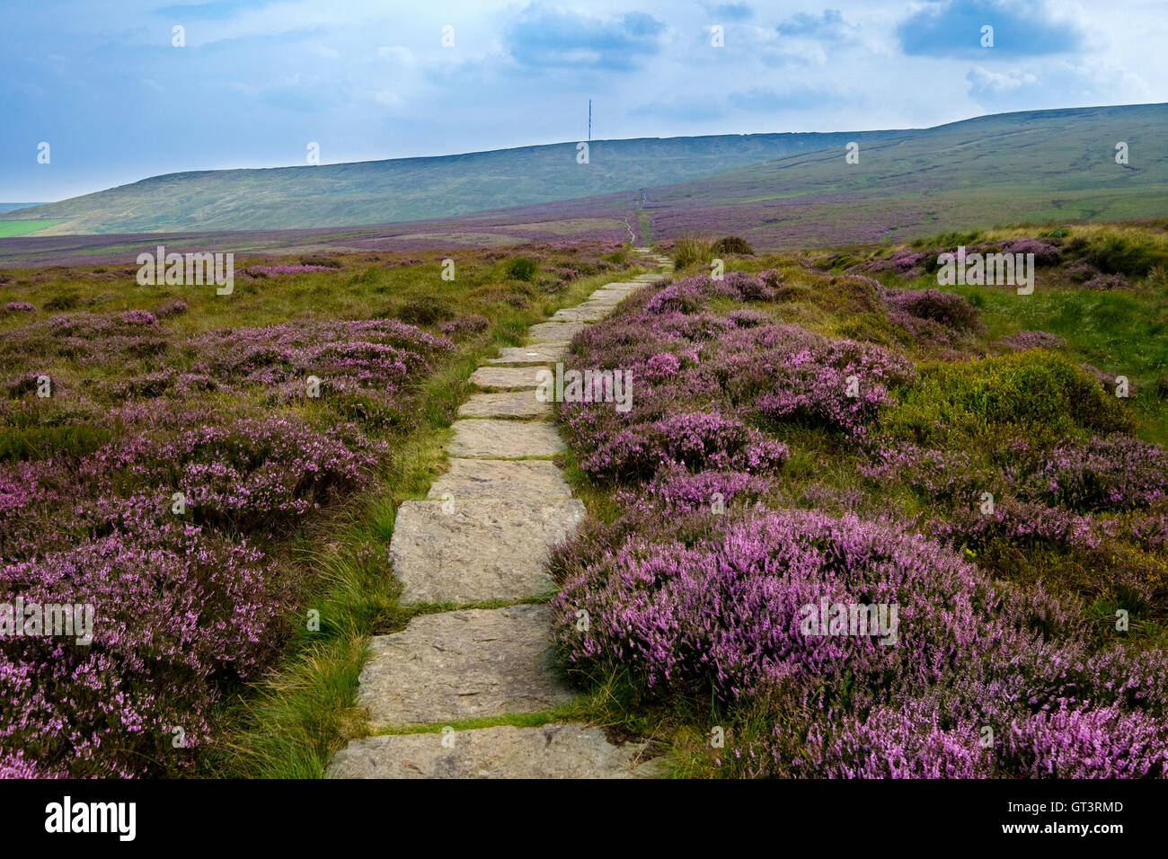 Heather lined paved section of the Pennine Way on Saddleworth Moor Yorkshire - Stock Image