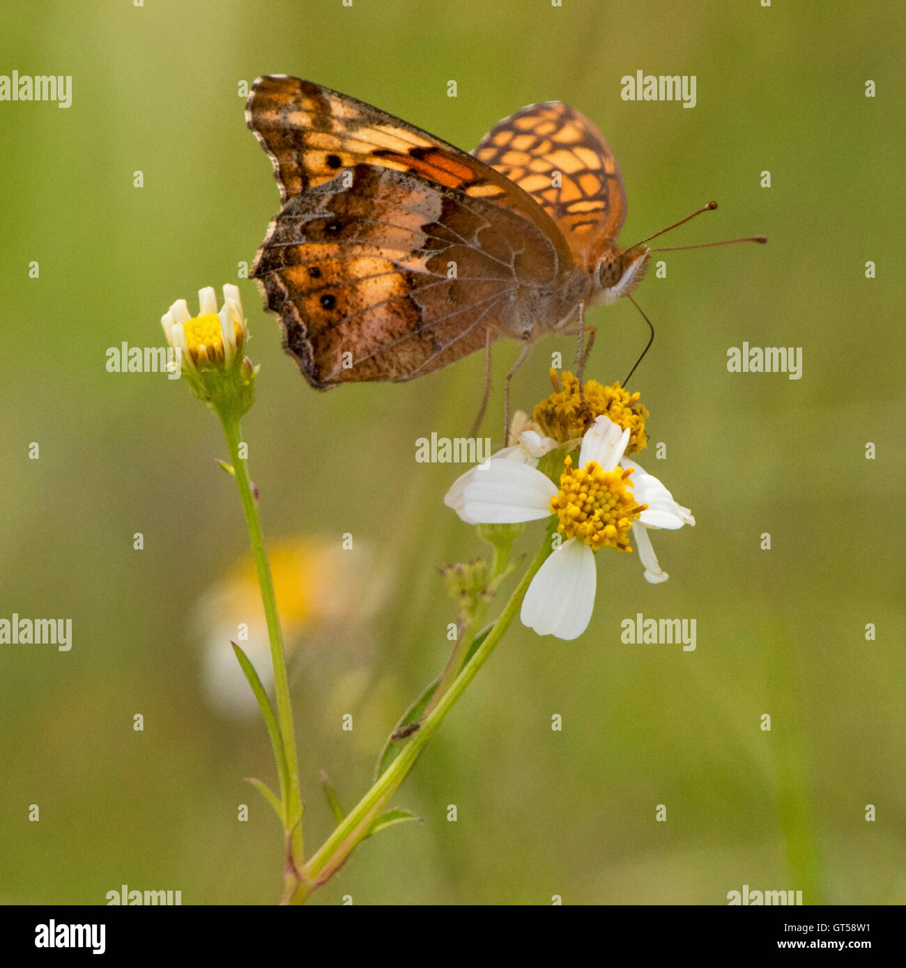 White flower butterfly florida stock photos white flower butterfly butterfly on a white flower stock image mightylinksfo