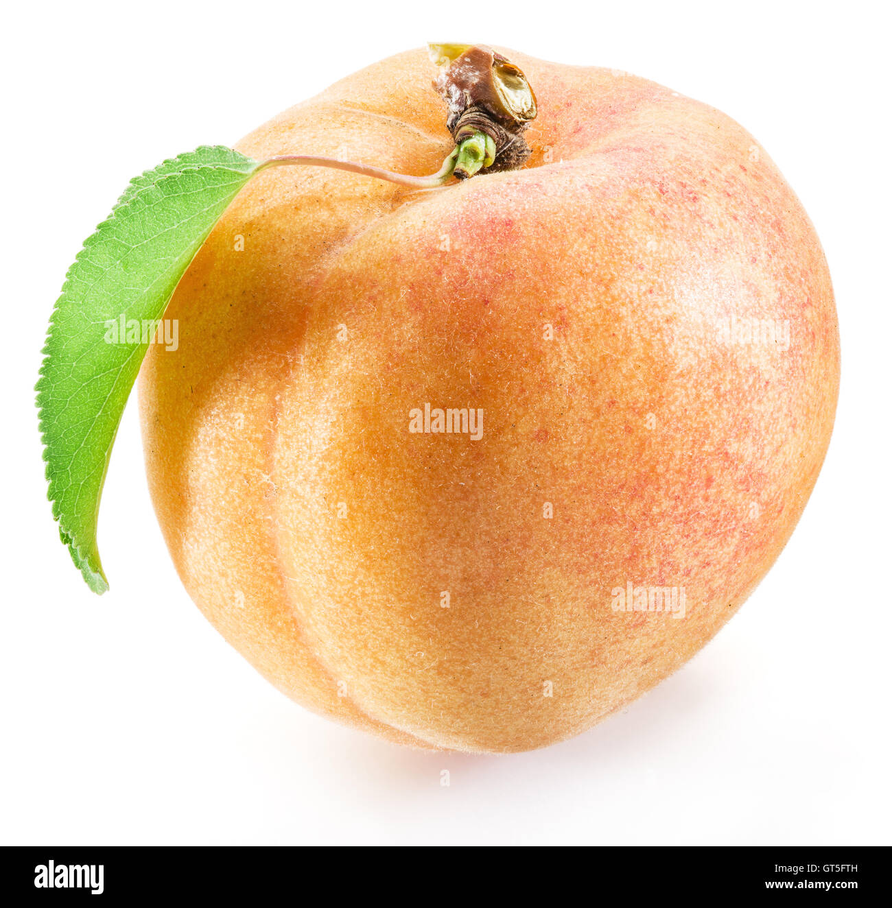 Apricot fruit with leaf on the white background. - Stock Image